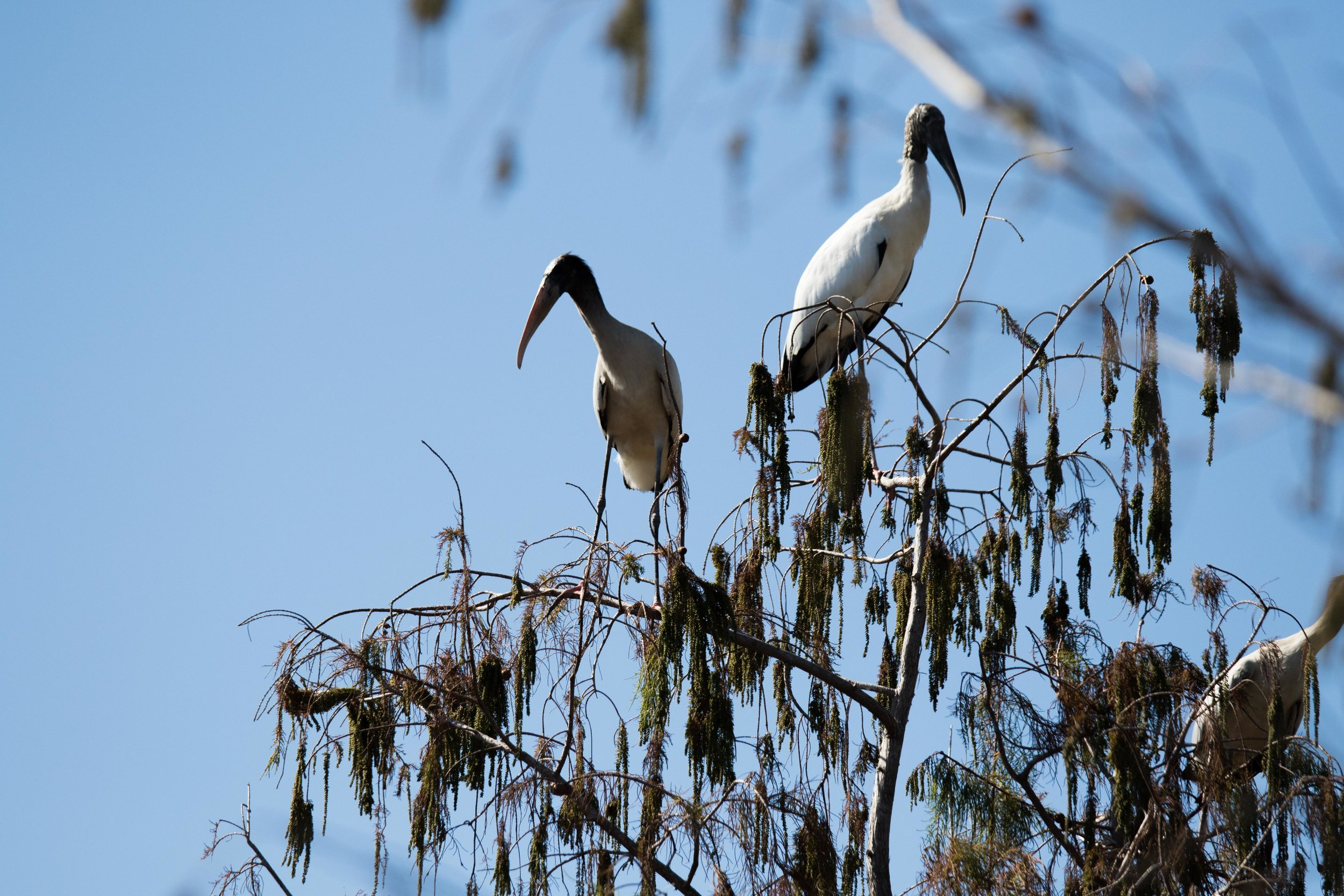 2019_Everglades-202.jpg
