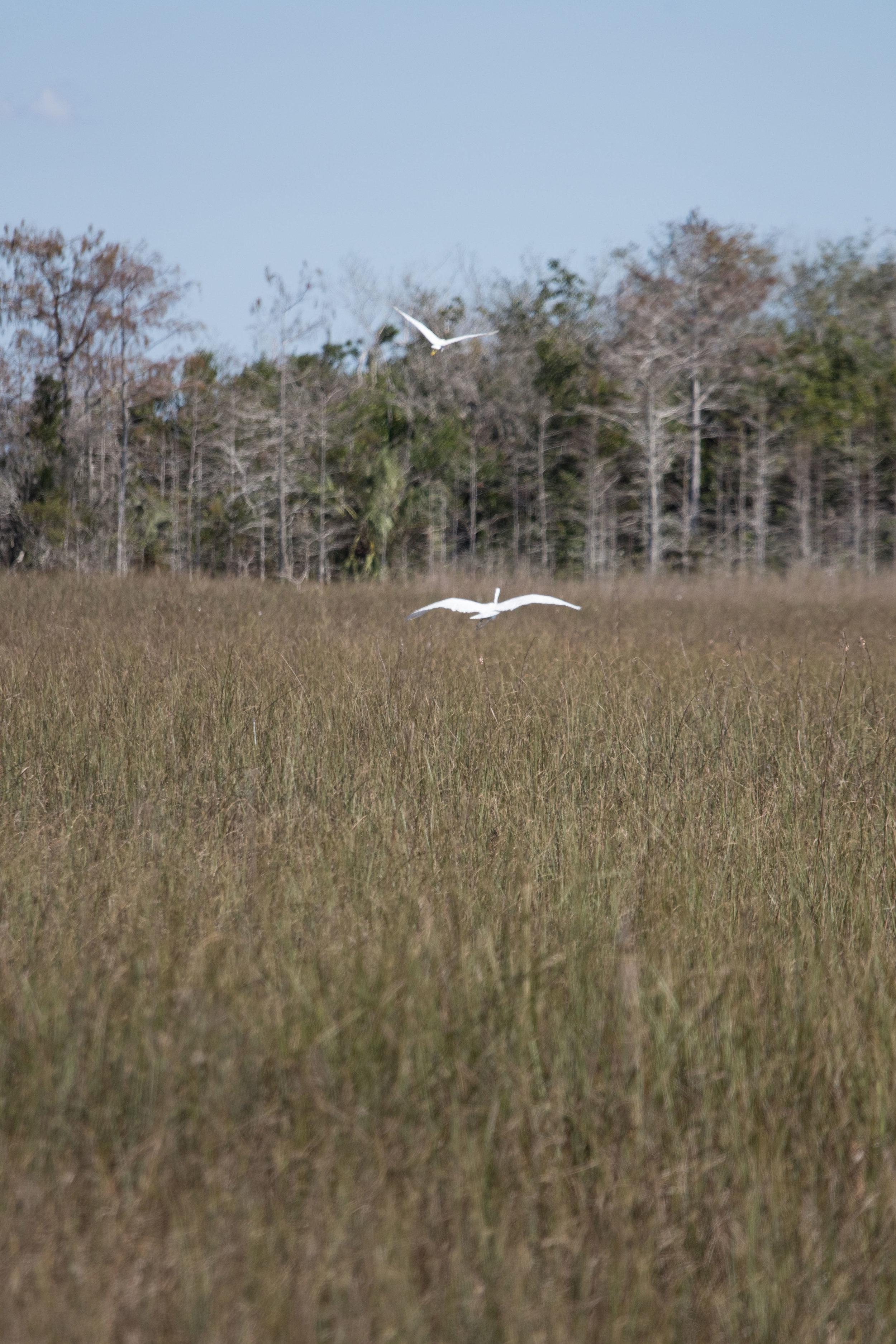 2019_Everglades-203.jpg