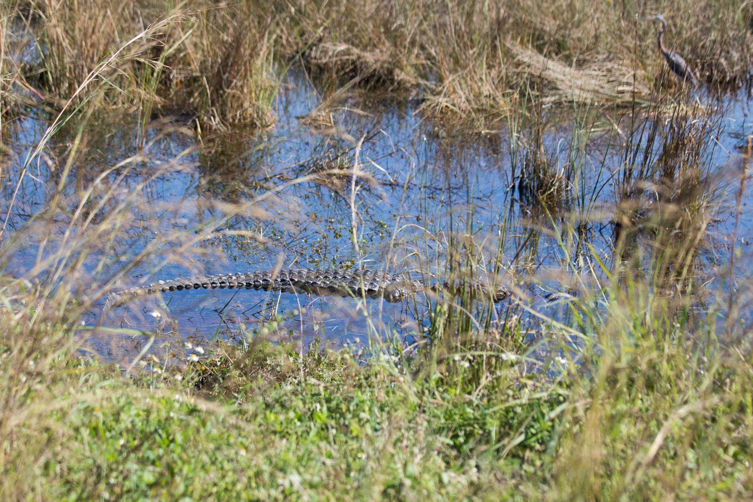 2019_Everglades-204.jpg