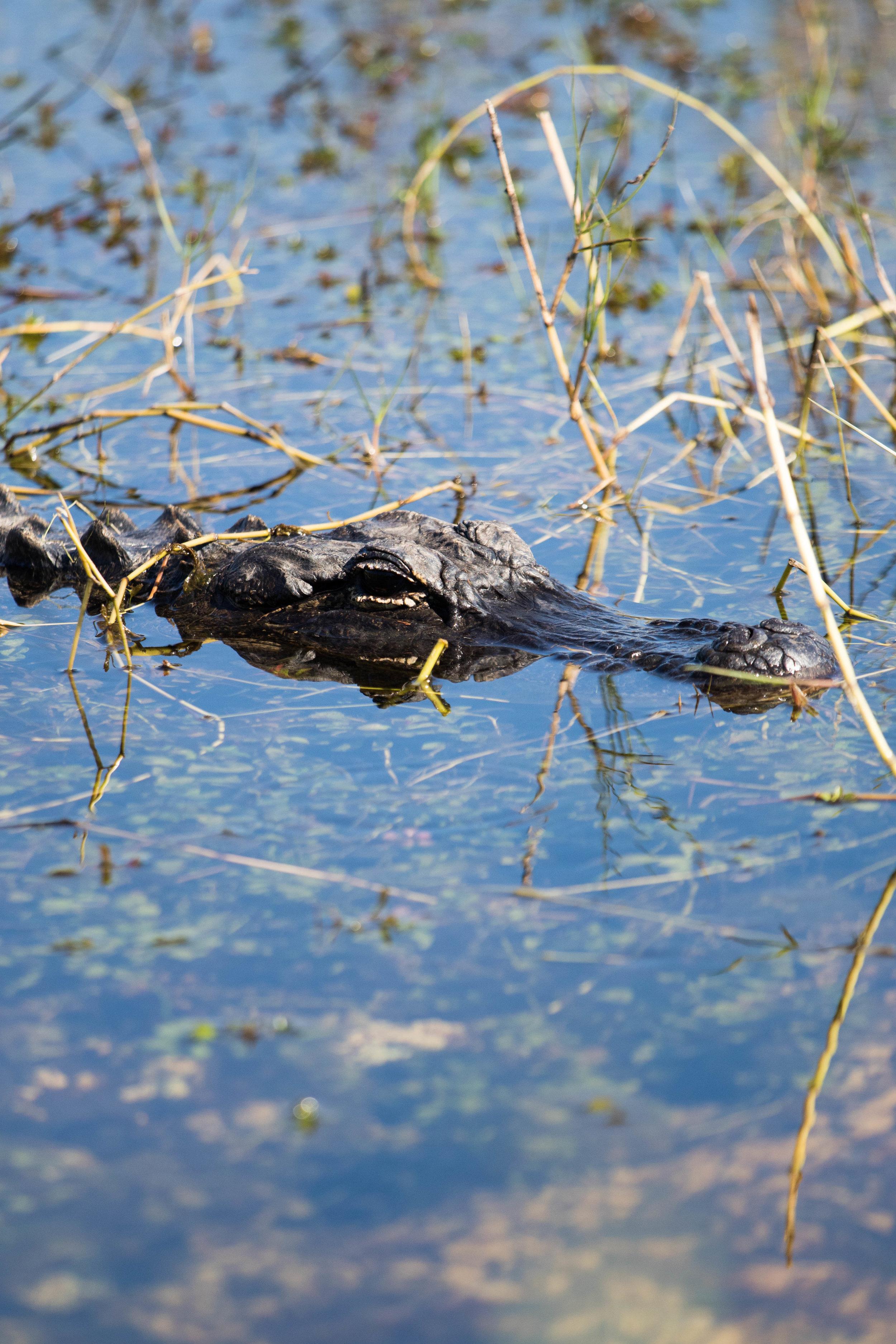 2019_Everglades-207.jpg