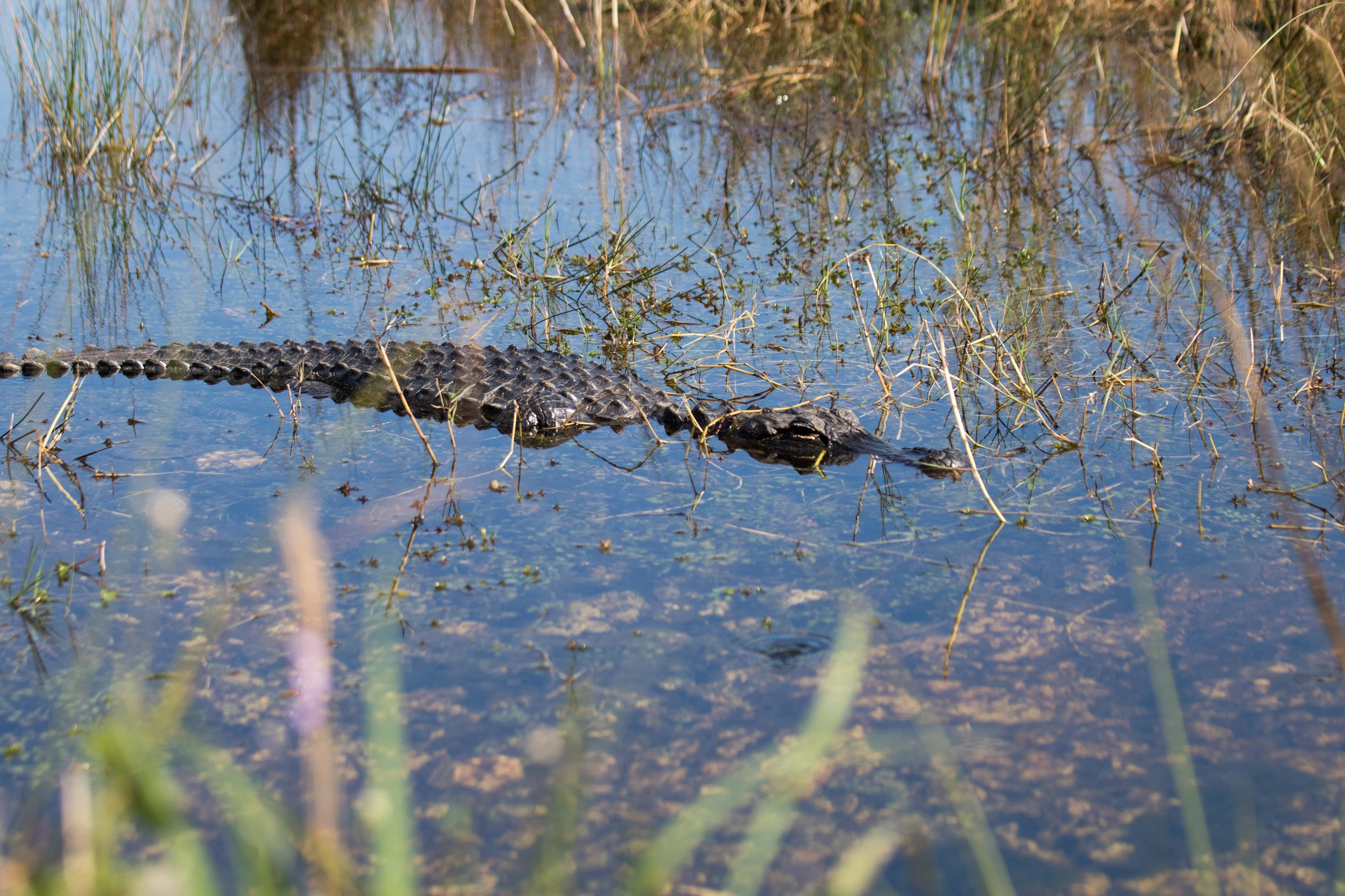 2019_Everglades-206.jpg