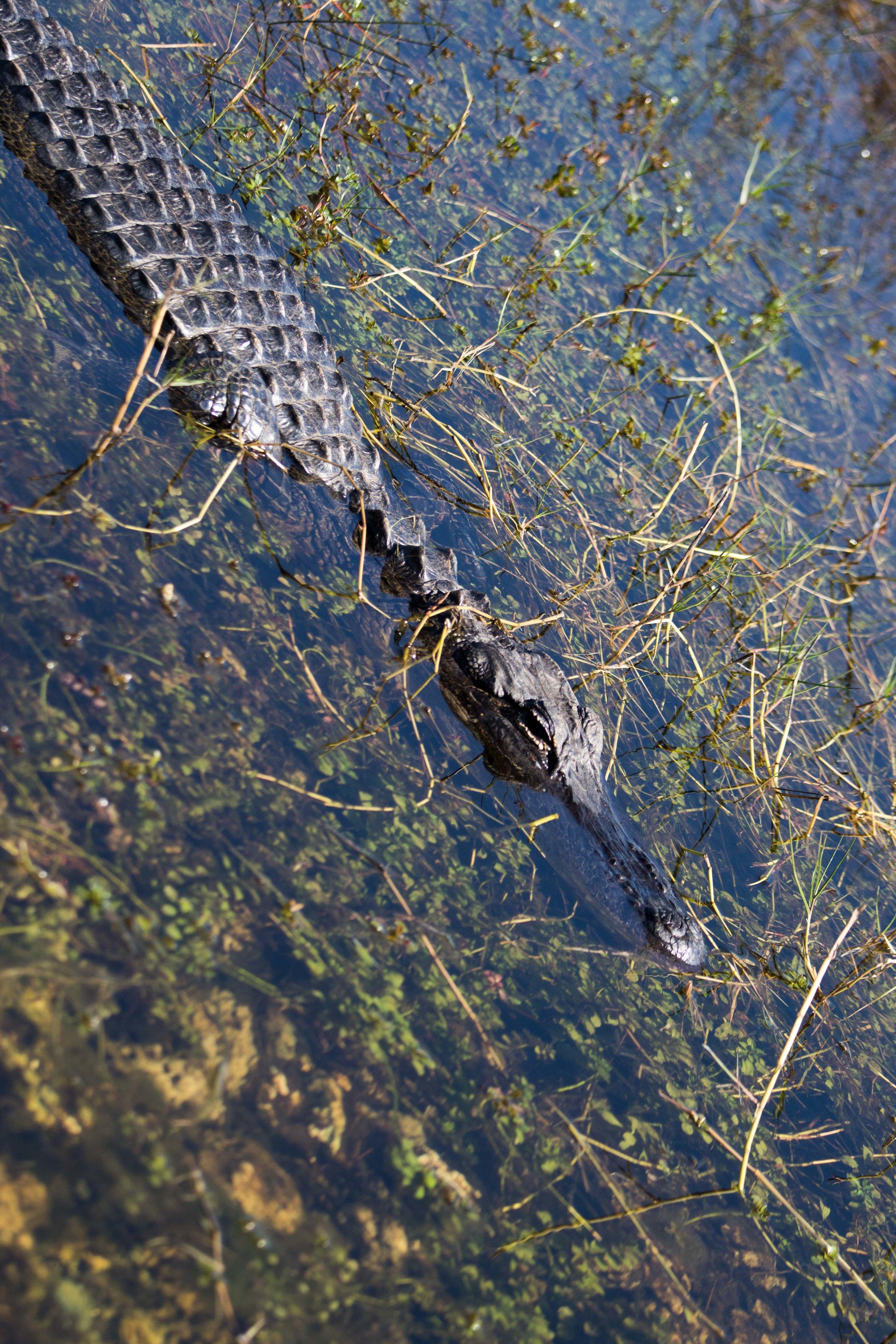 2019_Everglades-208.jpg