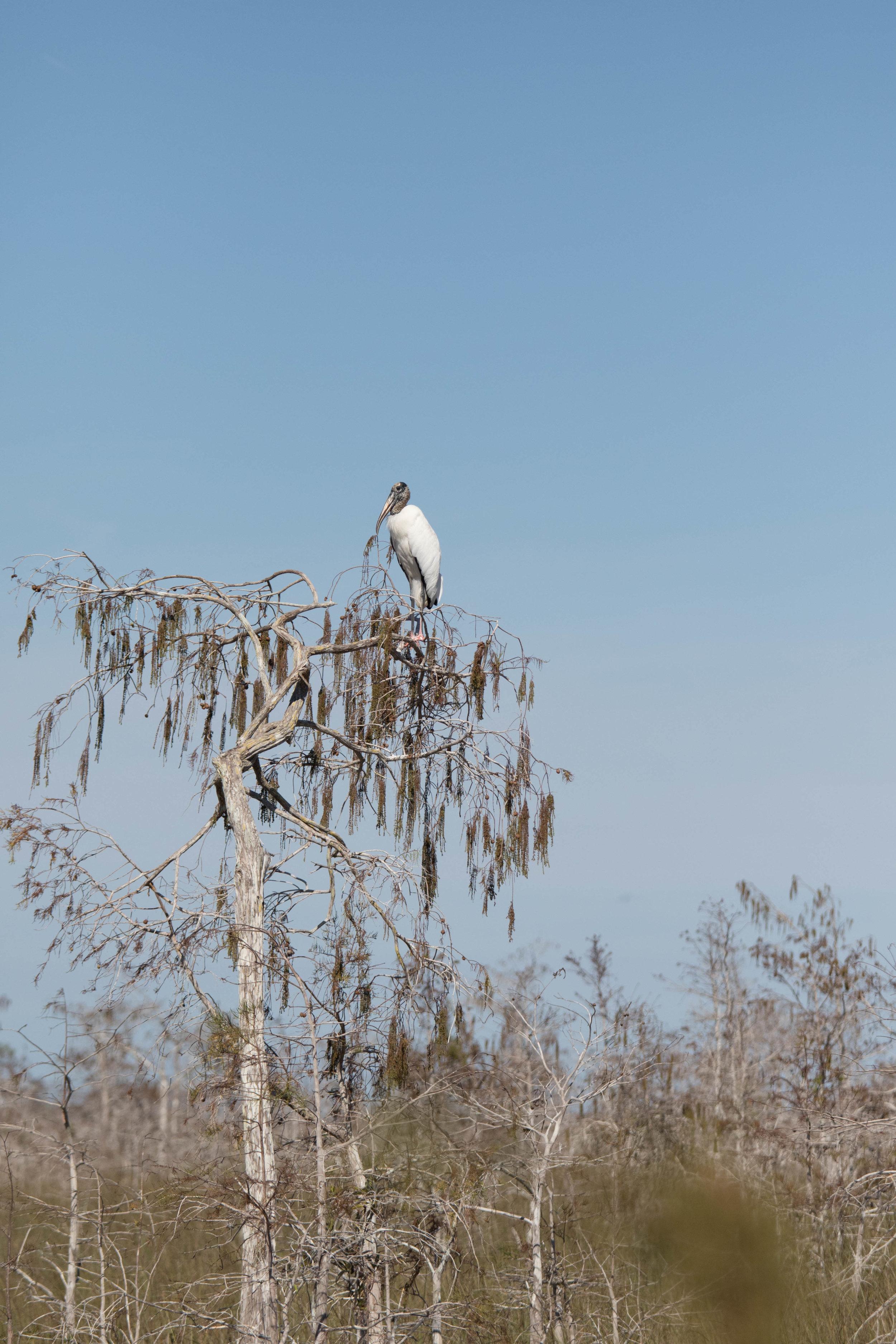 2019_Everglades-210.jpg