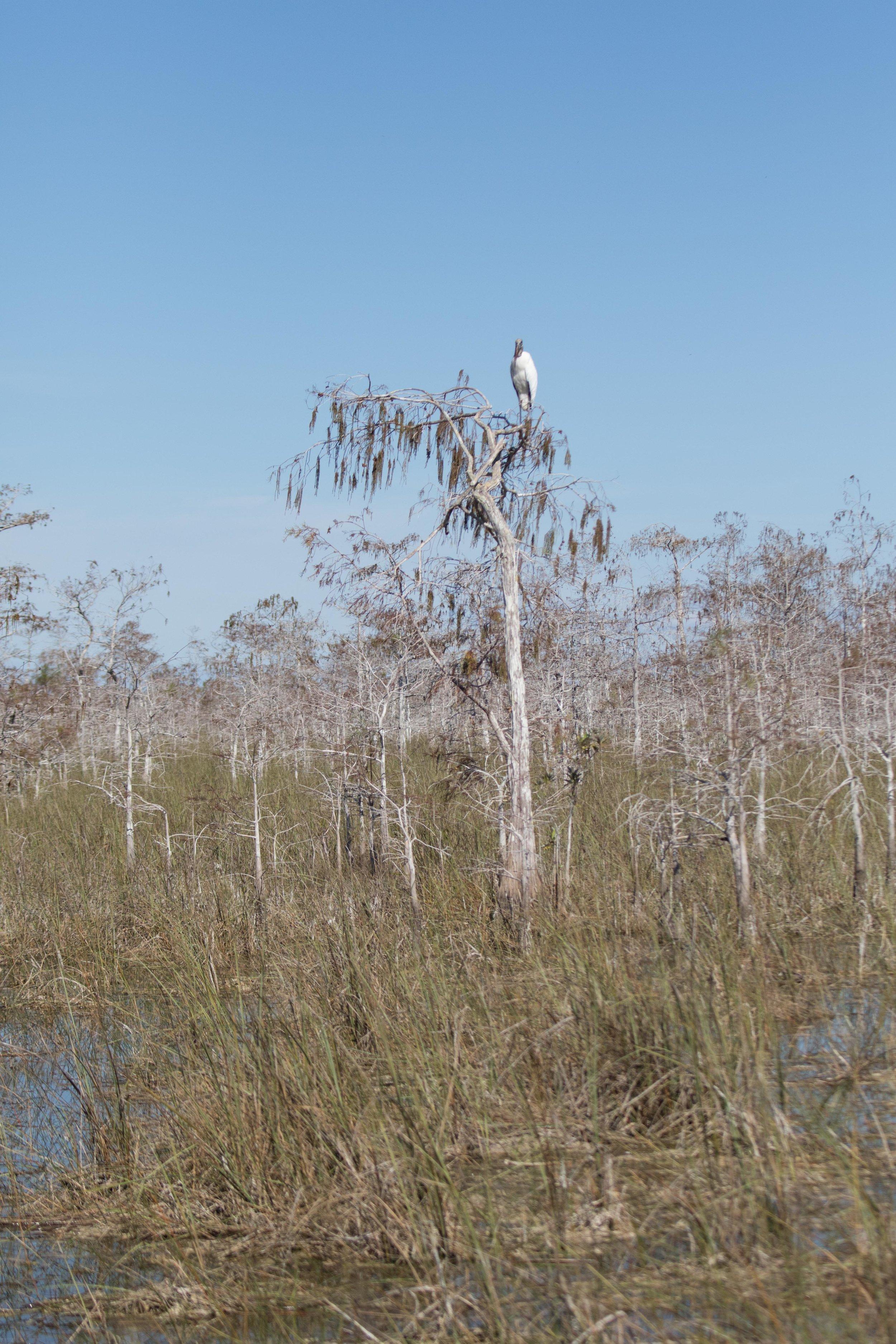 2019_Everglades-213.jpg