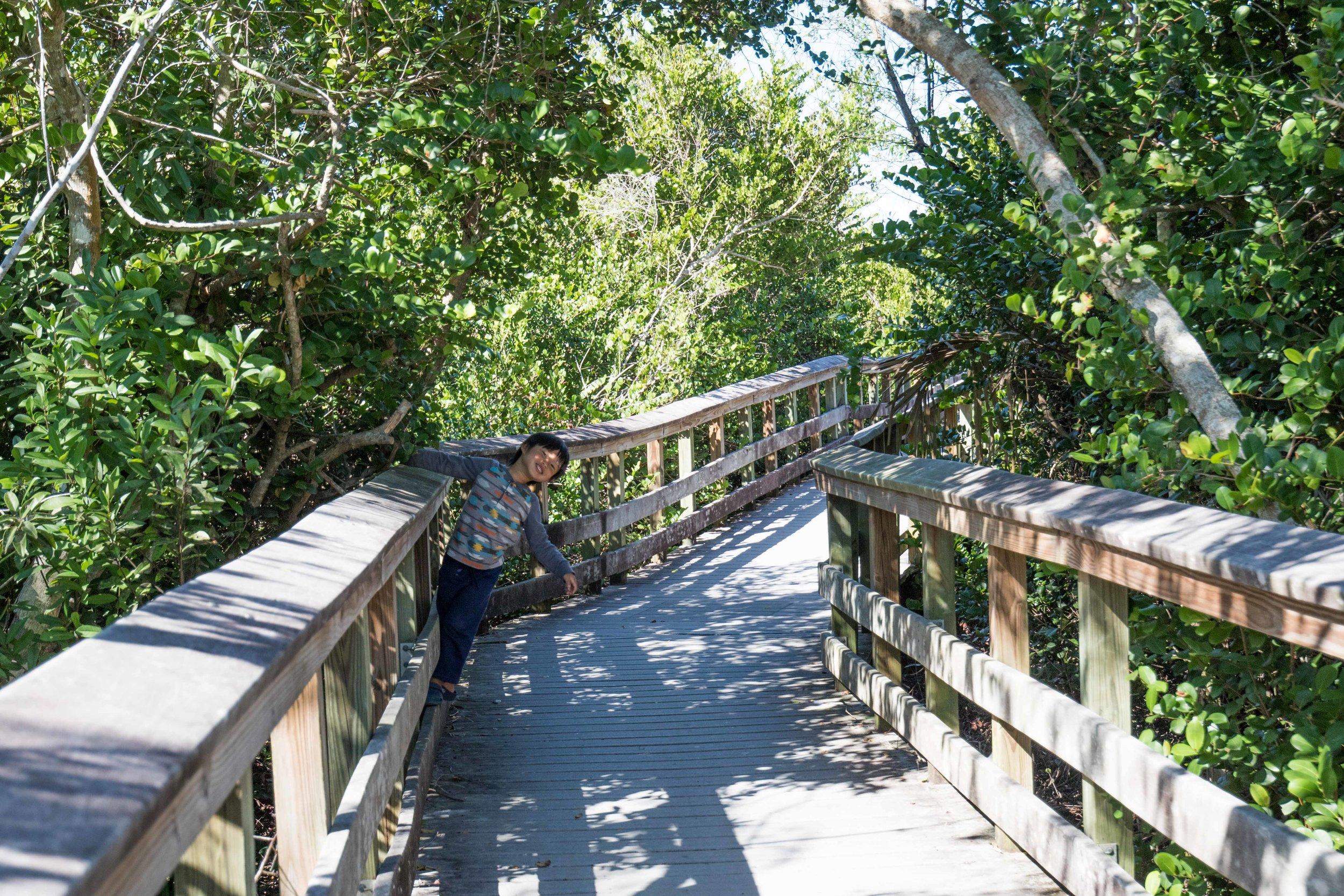 2019_Everglades-214.jpg