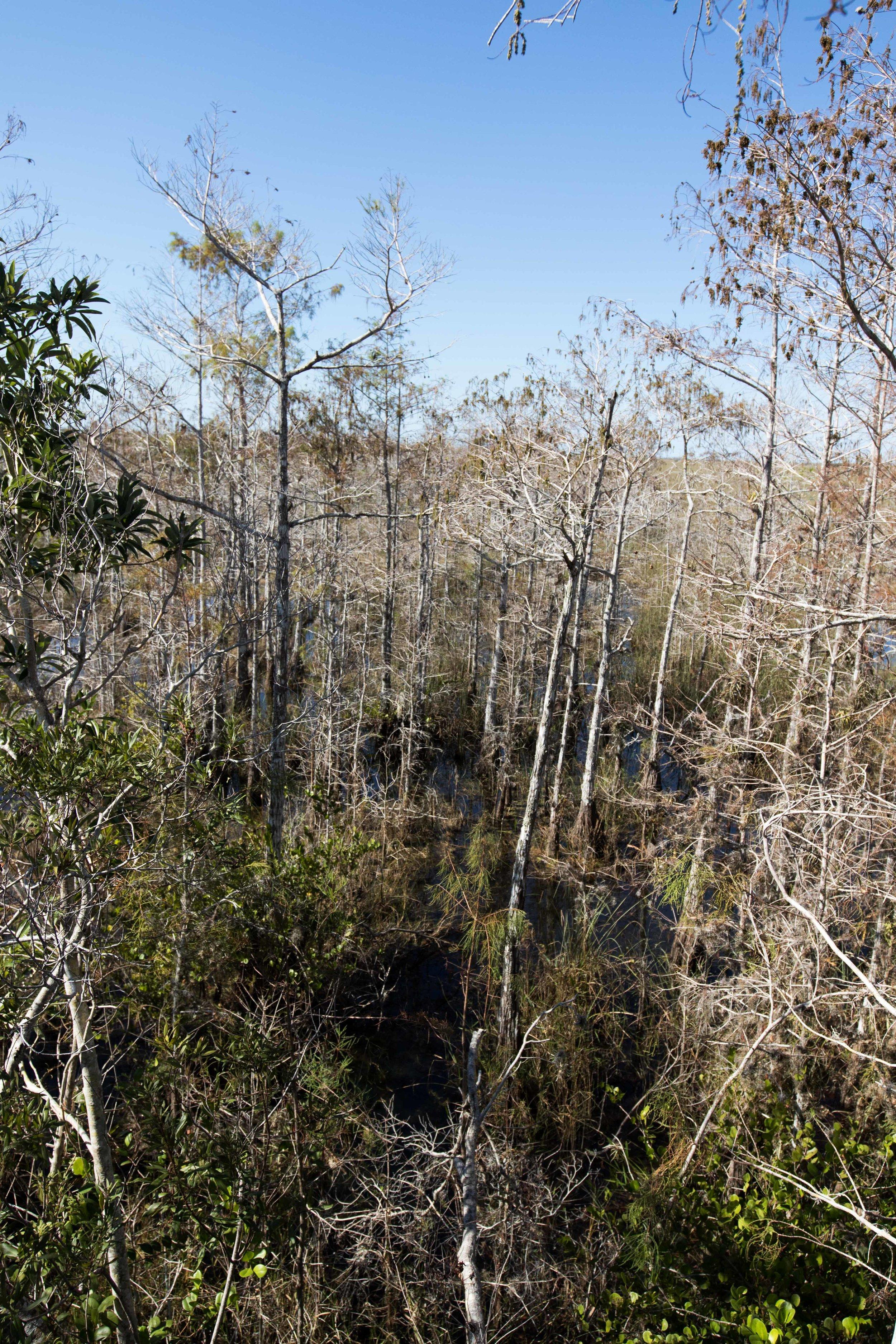 2019_Everglades-217.jpg