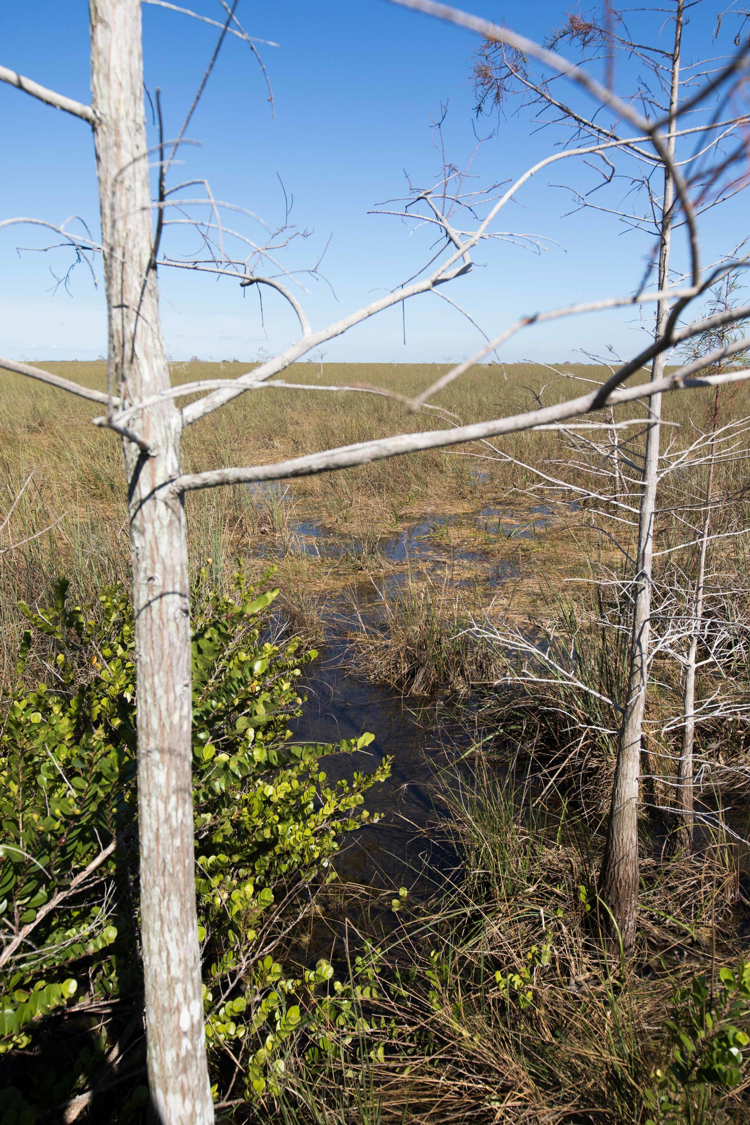2019_Everglades-221.jpg