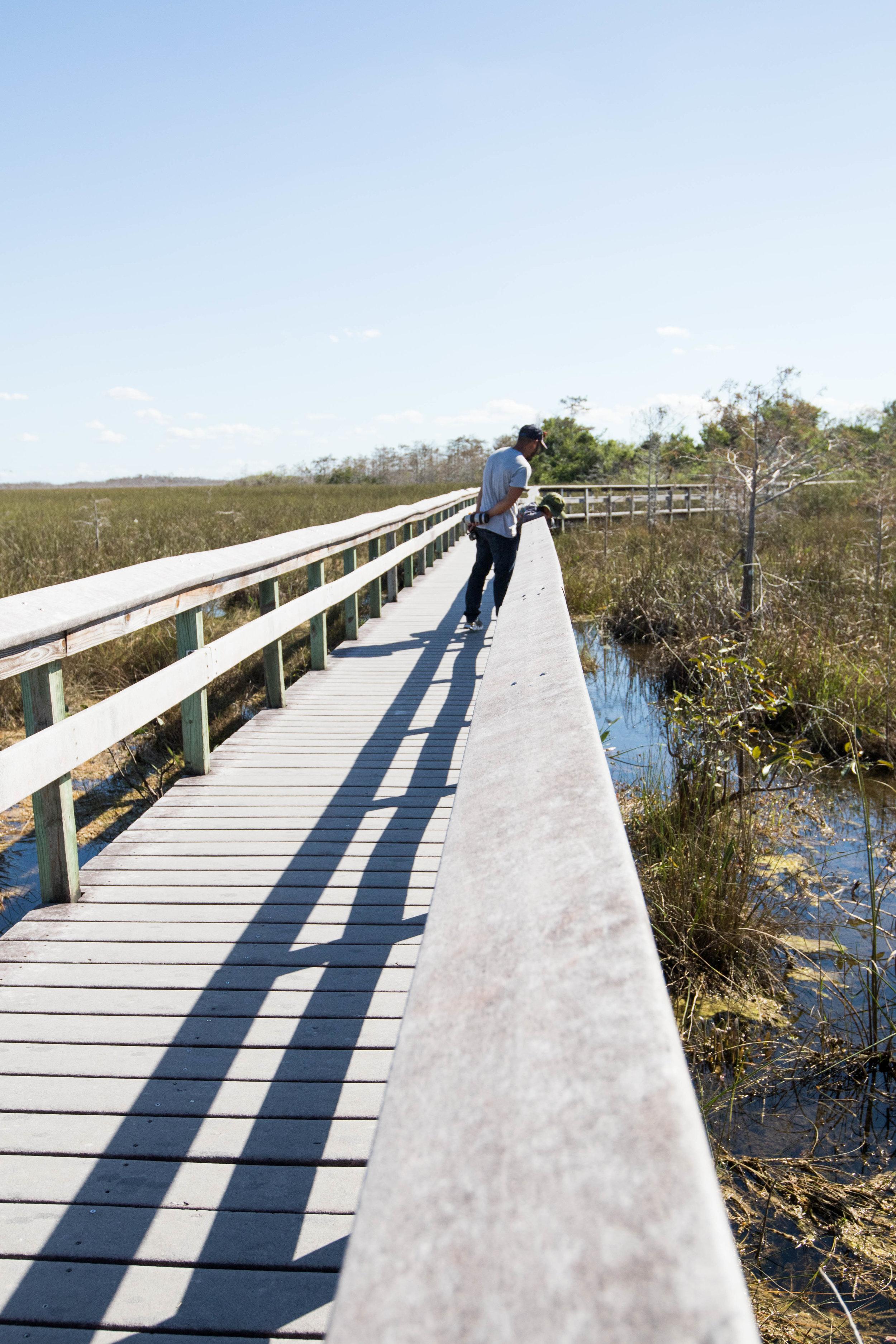 2019_Everglades-225.jpg