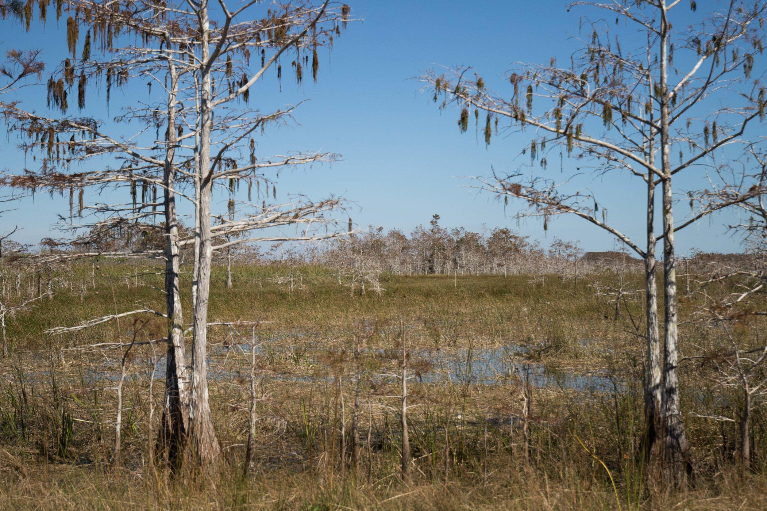 2019_Everglades-229.jpg