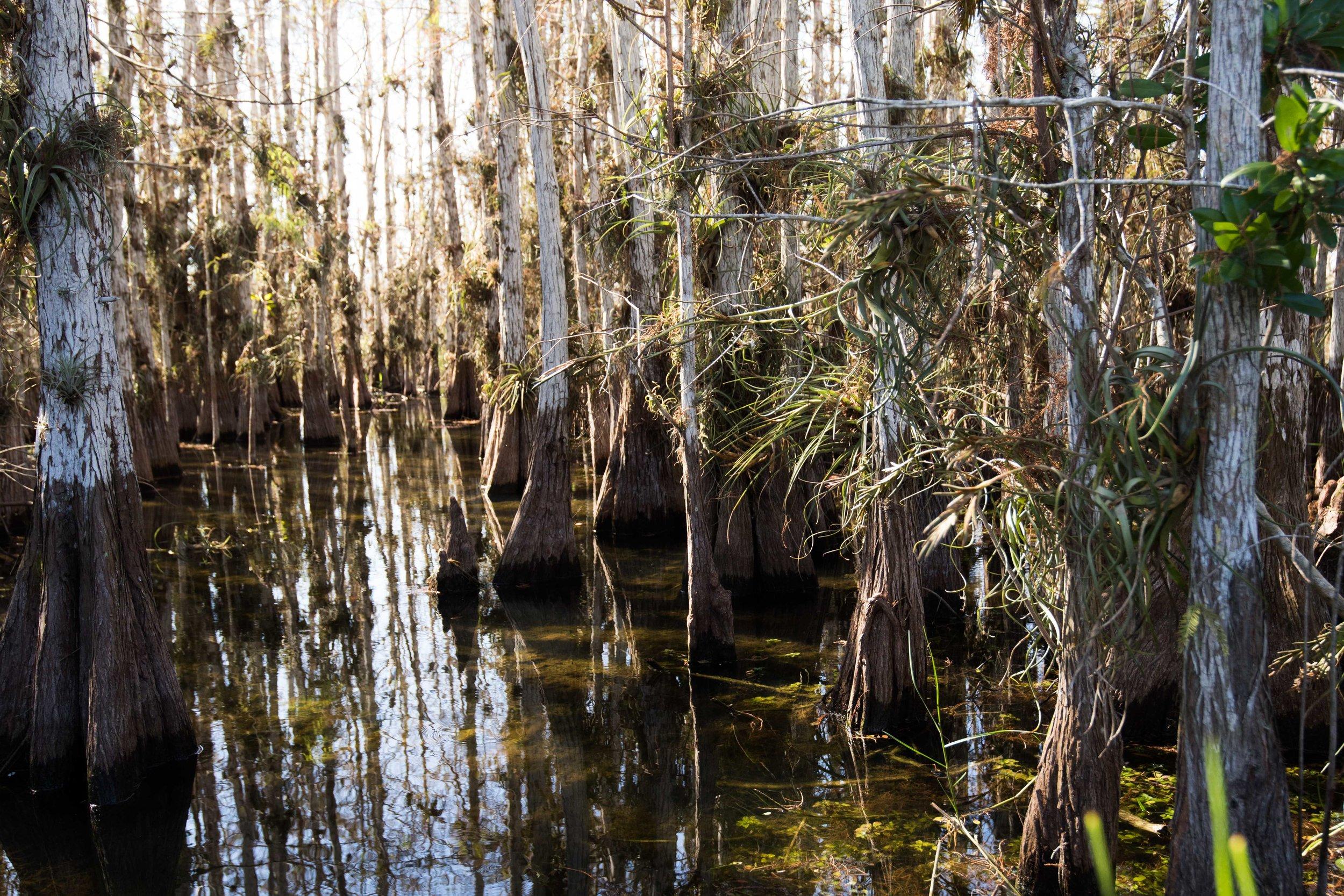 2019_Everglades-238.jpg