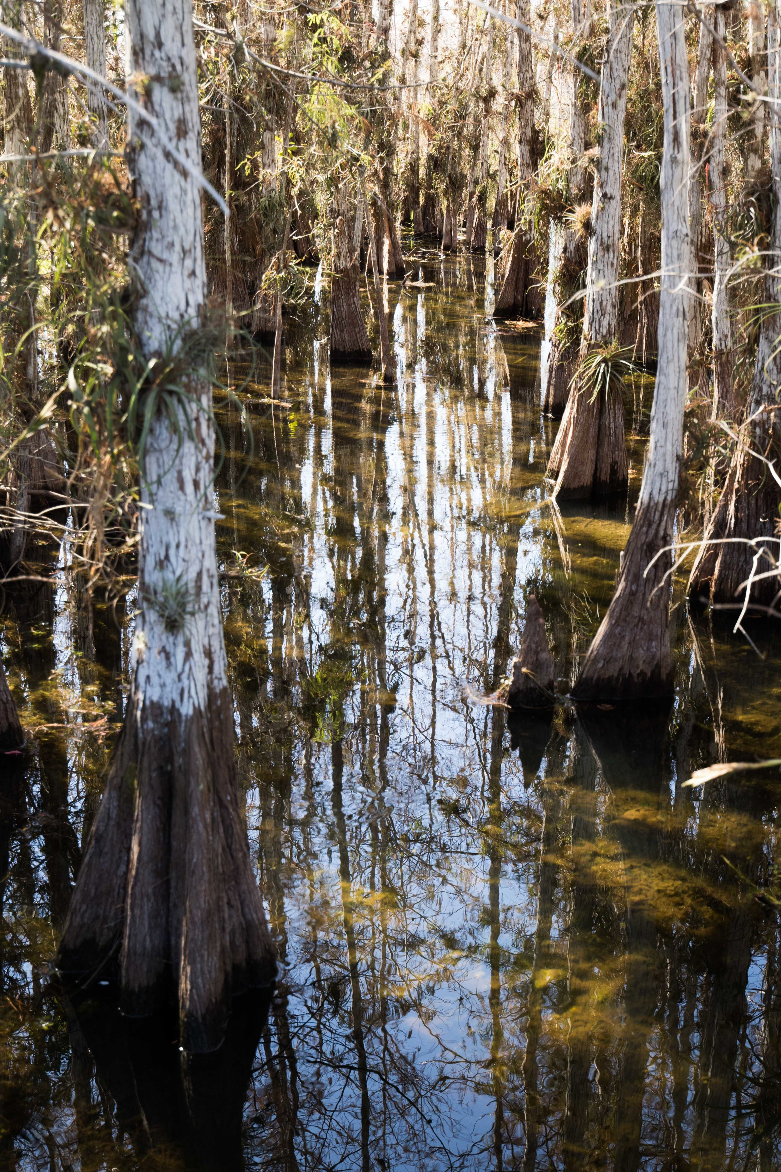 2019_Everglades-240.jpg