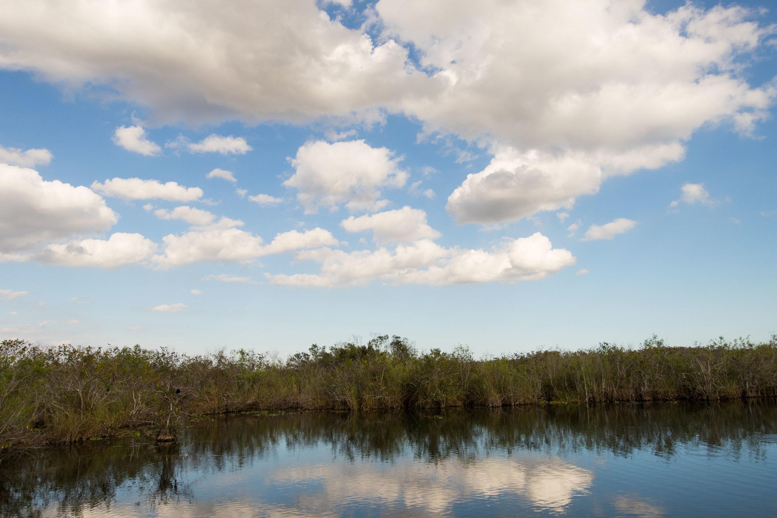2019_Everglades-244.jpg