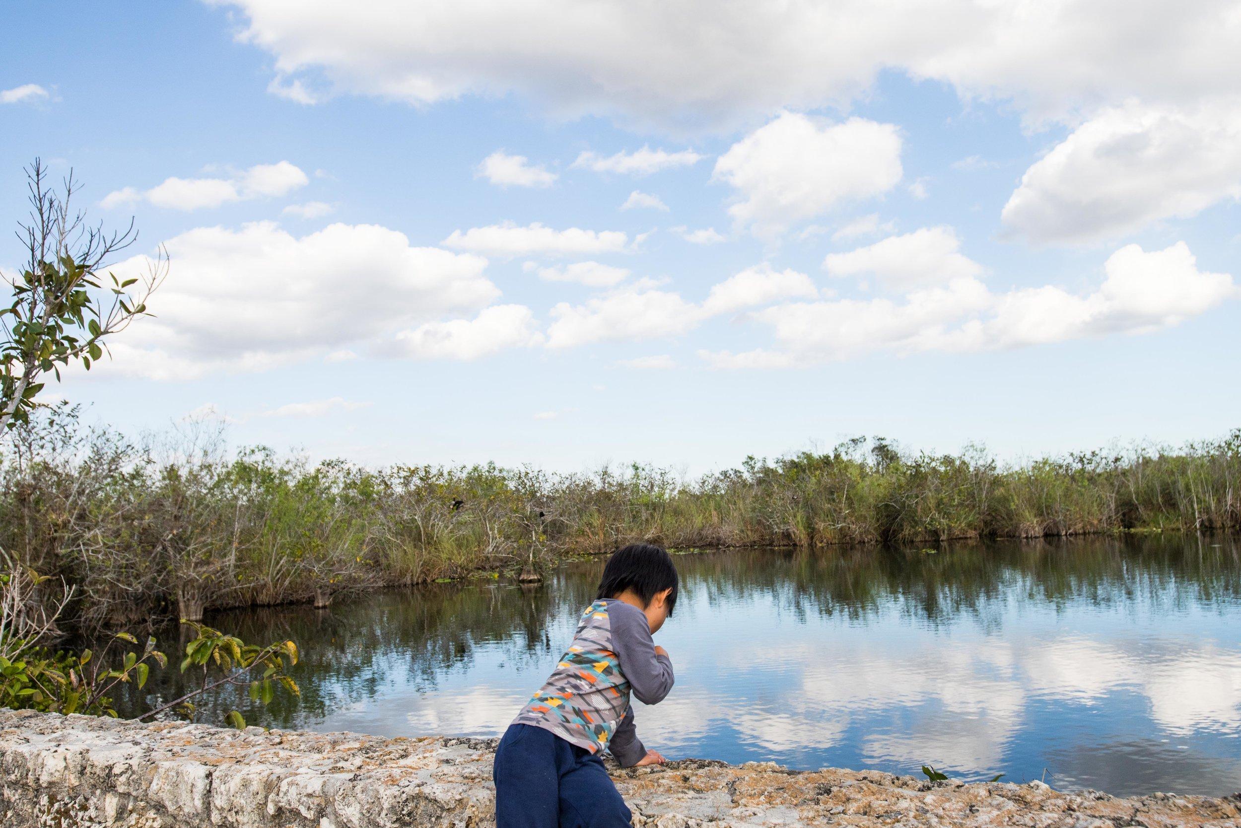 2019_Everglades-247.jpg