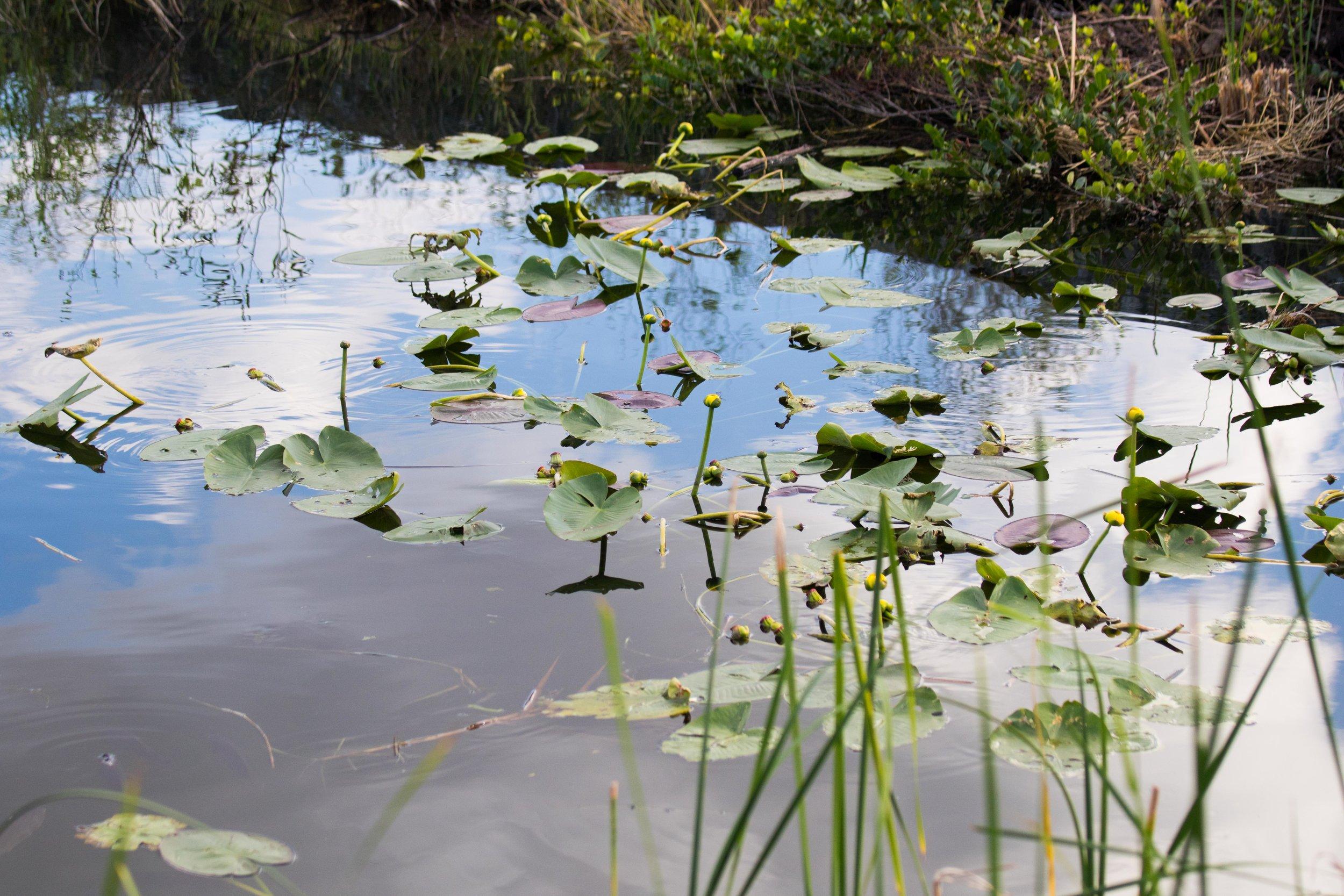 2019_Everglades-249.jpg