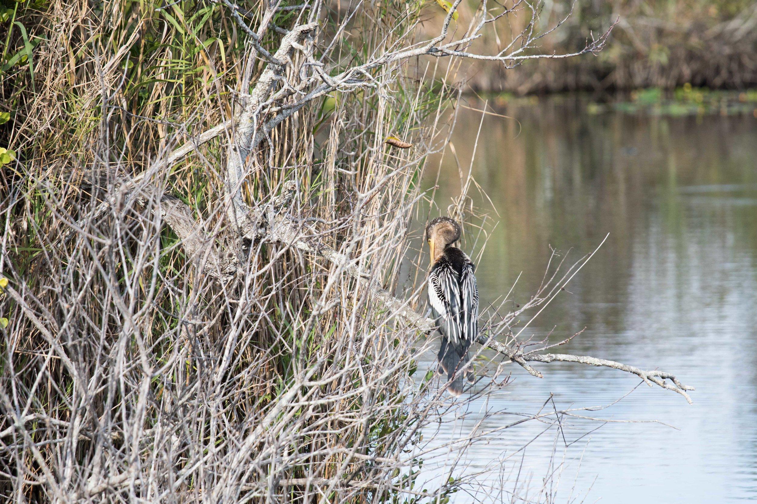 2019_Everglades-250.jpg
