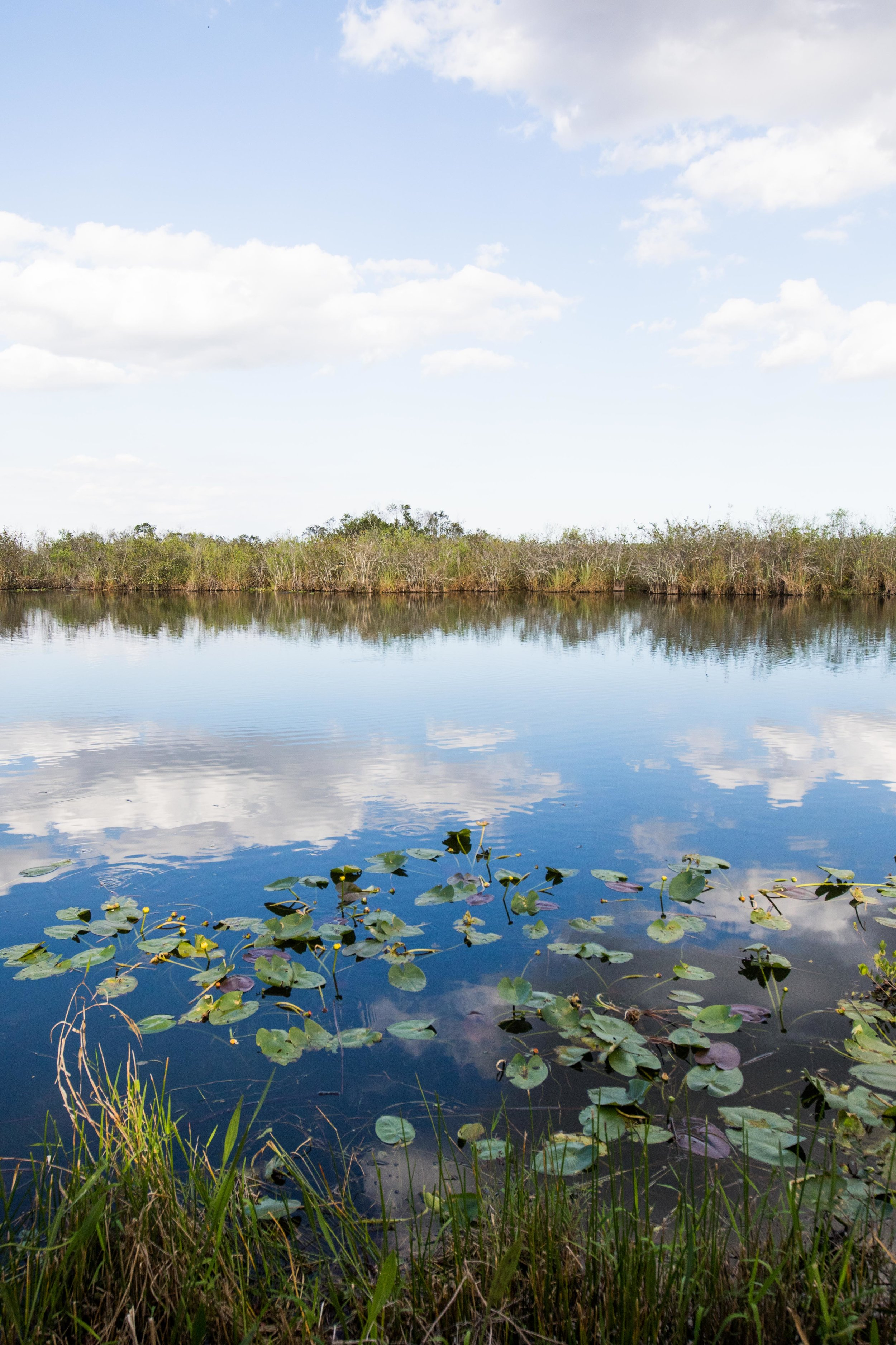 2019_Everglades-251.jpg