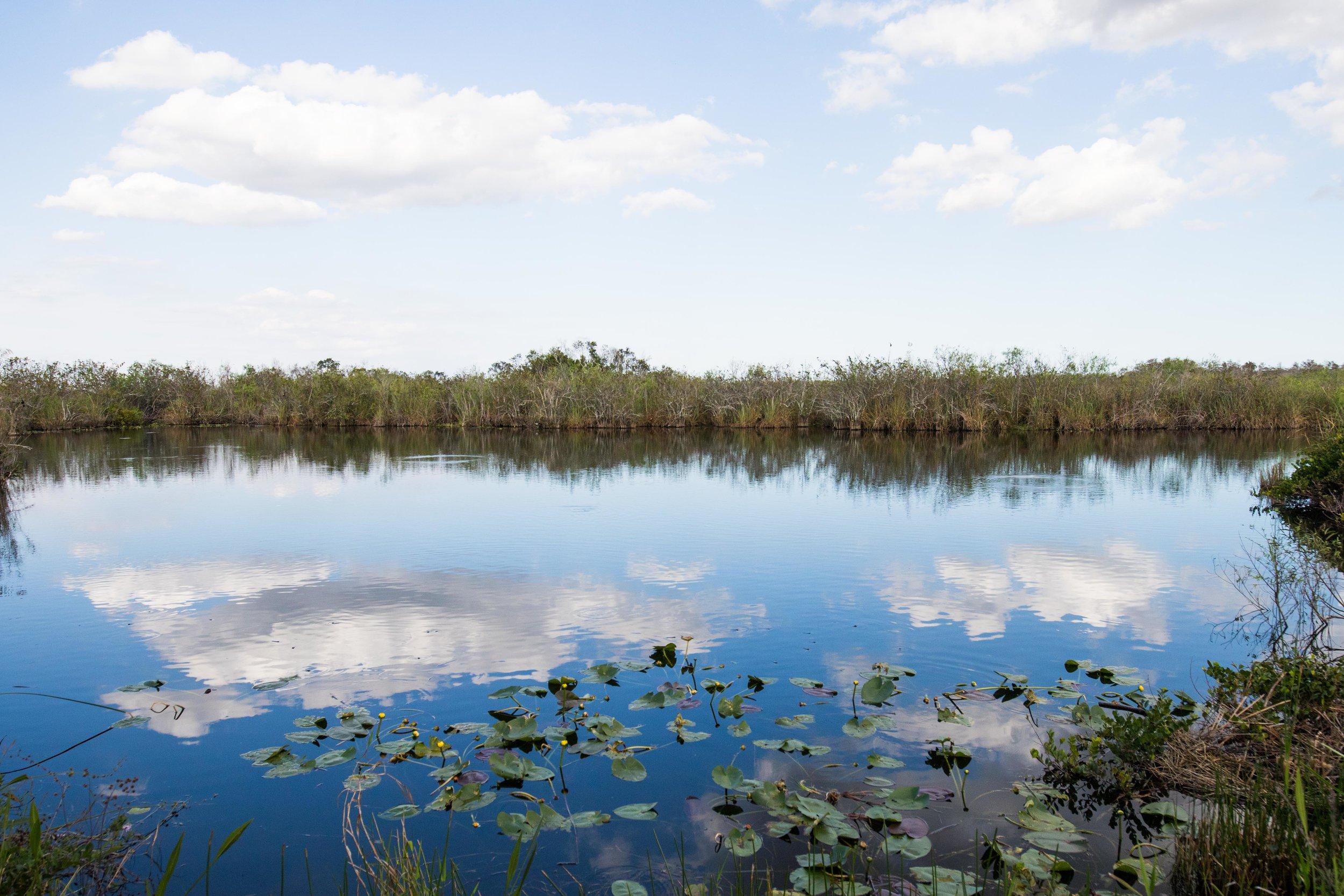 2019_Everglades-252.jpg