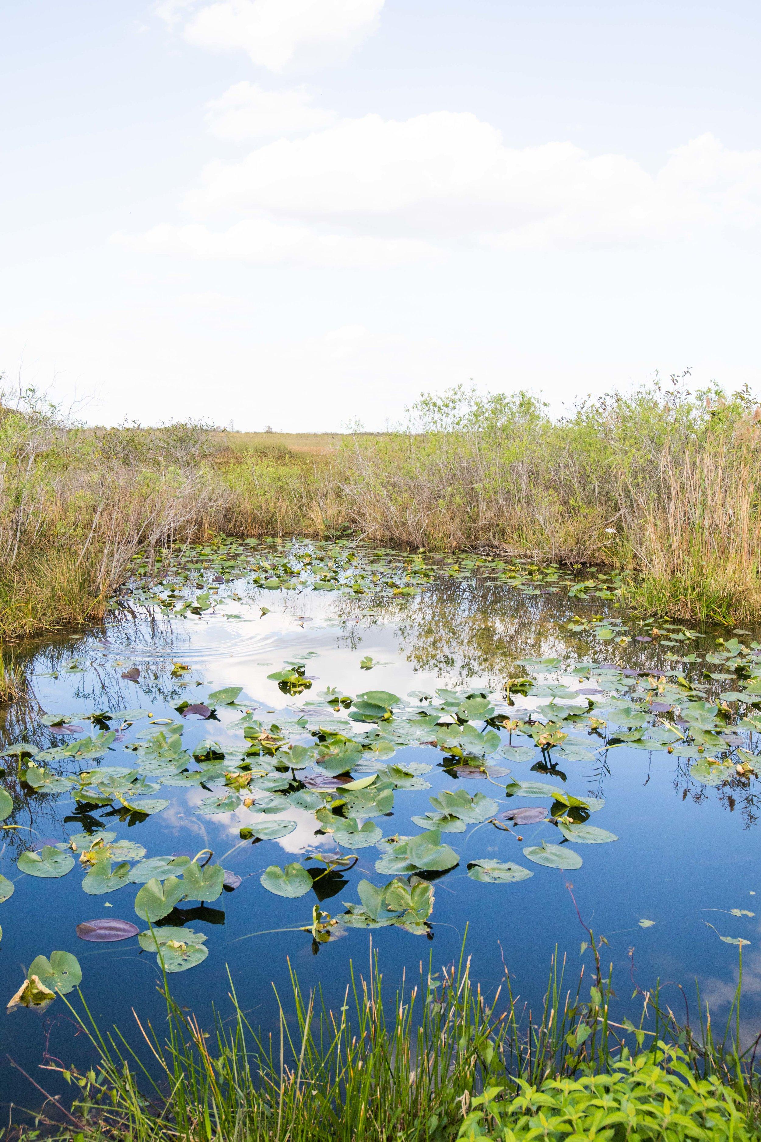 2019_Everglades-255.jpg