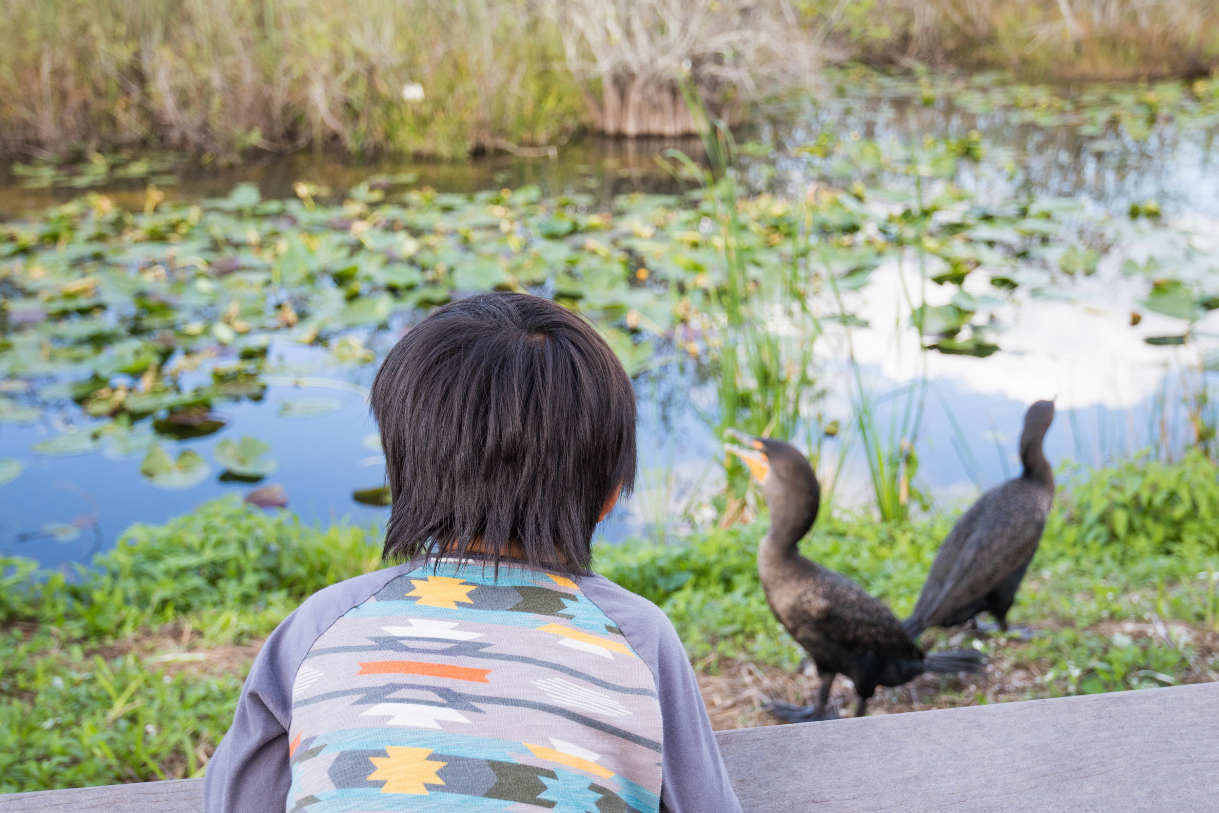 2019_Everglades-260.jpg