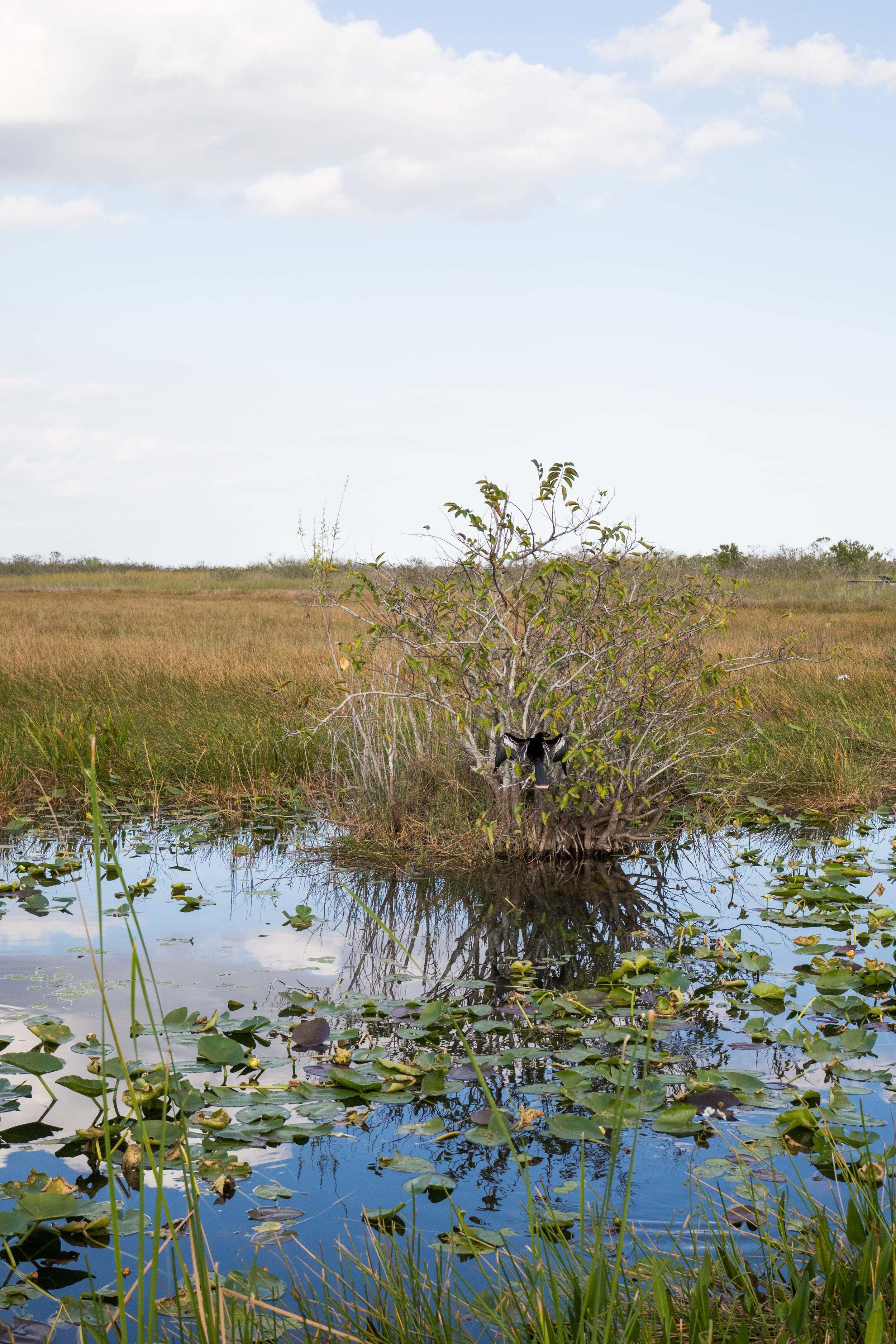 2019_Everglades-263.jpg