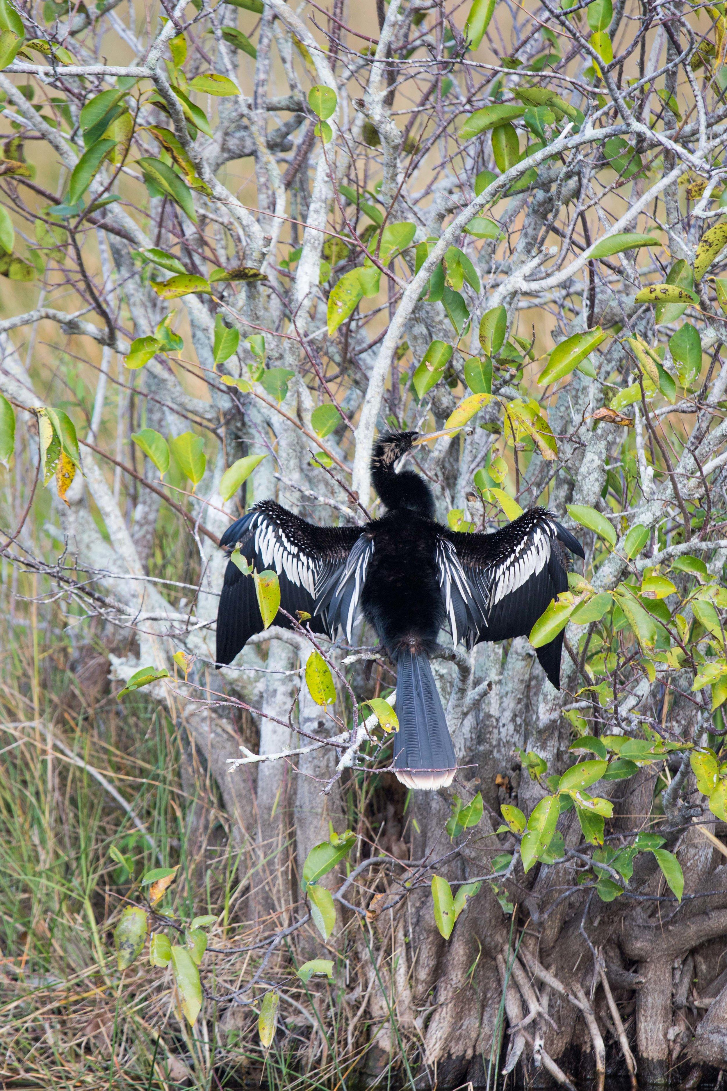 2019_Everglades-264.jpg