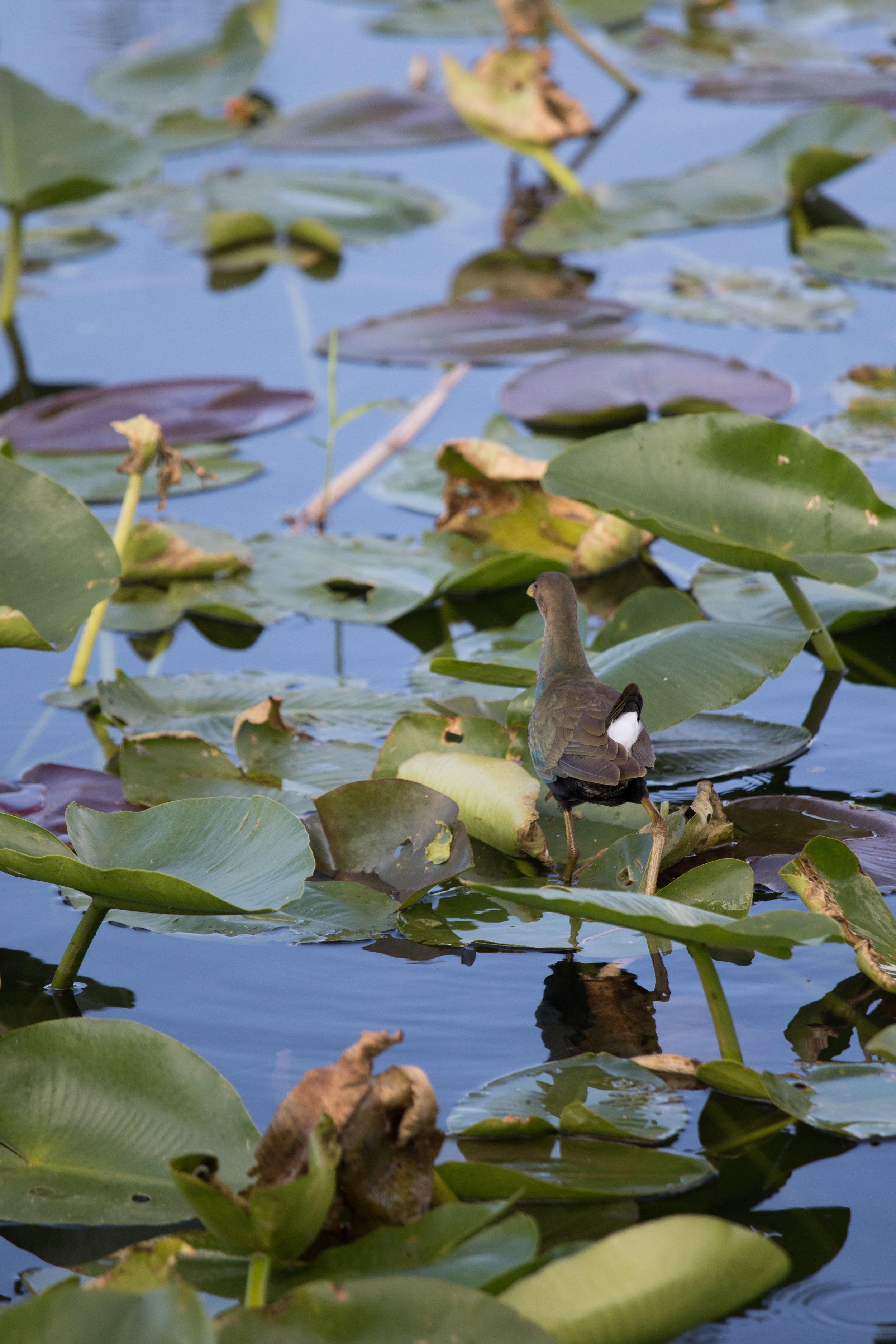 2019_Everglades-266.jpg