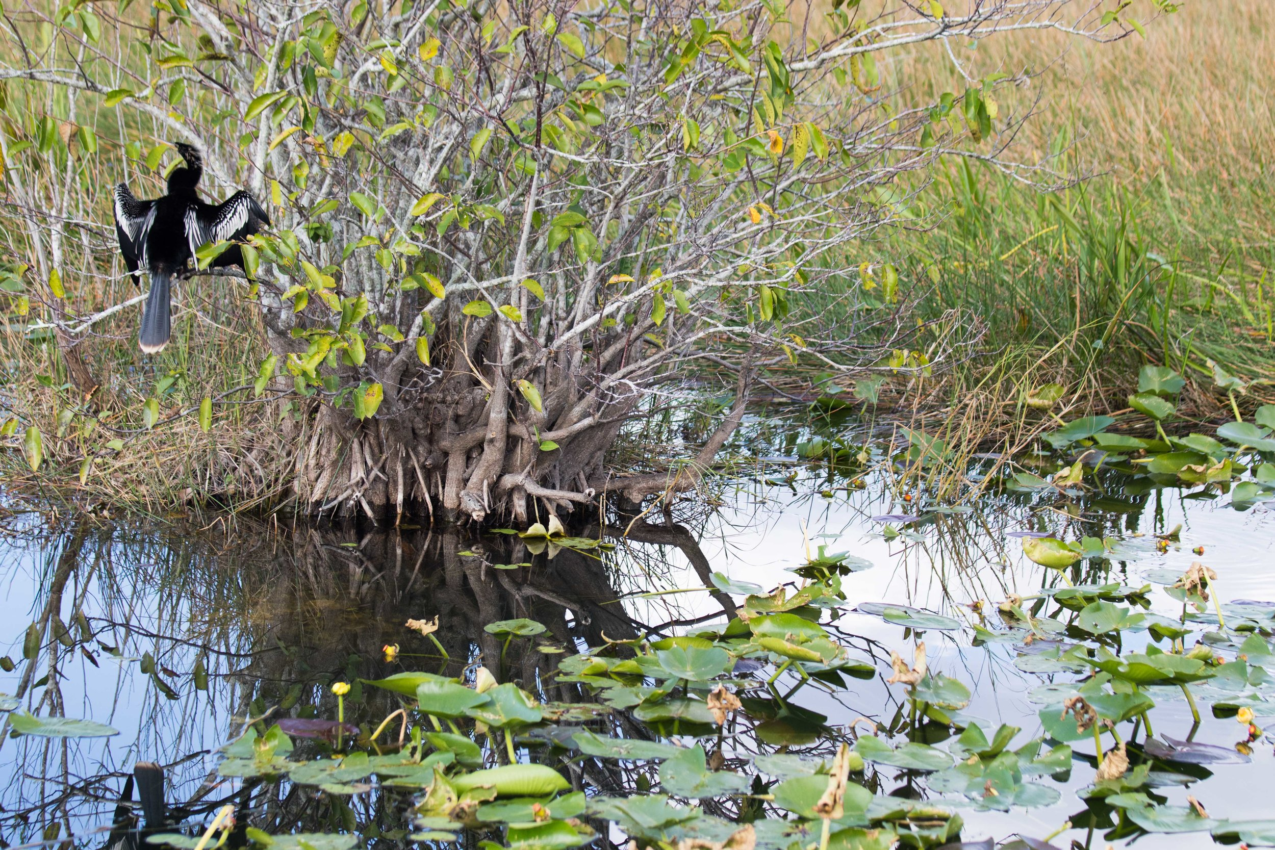 2019_Everglades-270.jpg