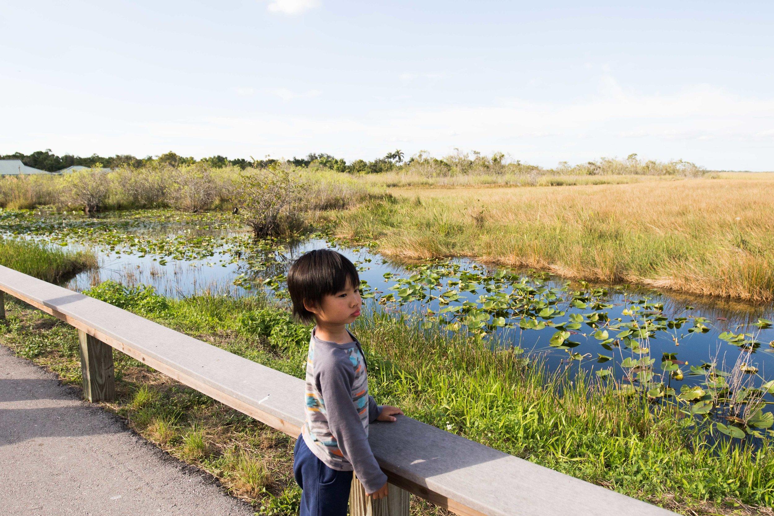 2019_Everglades-272.jpg