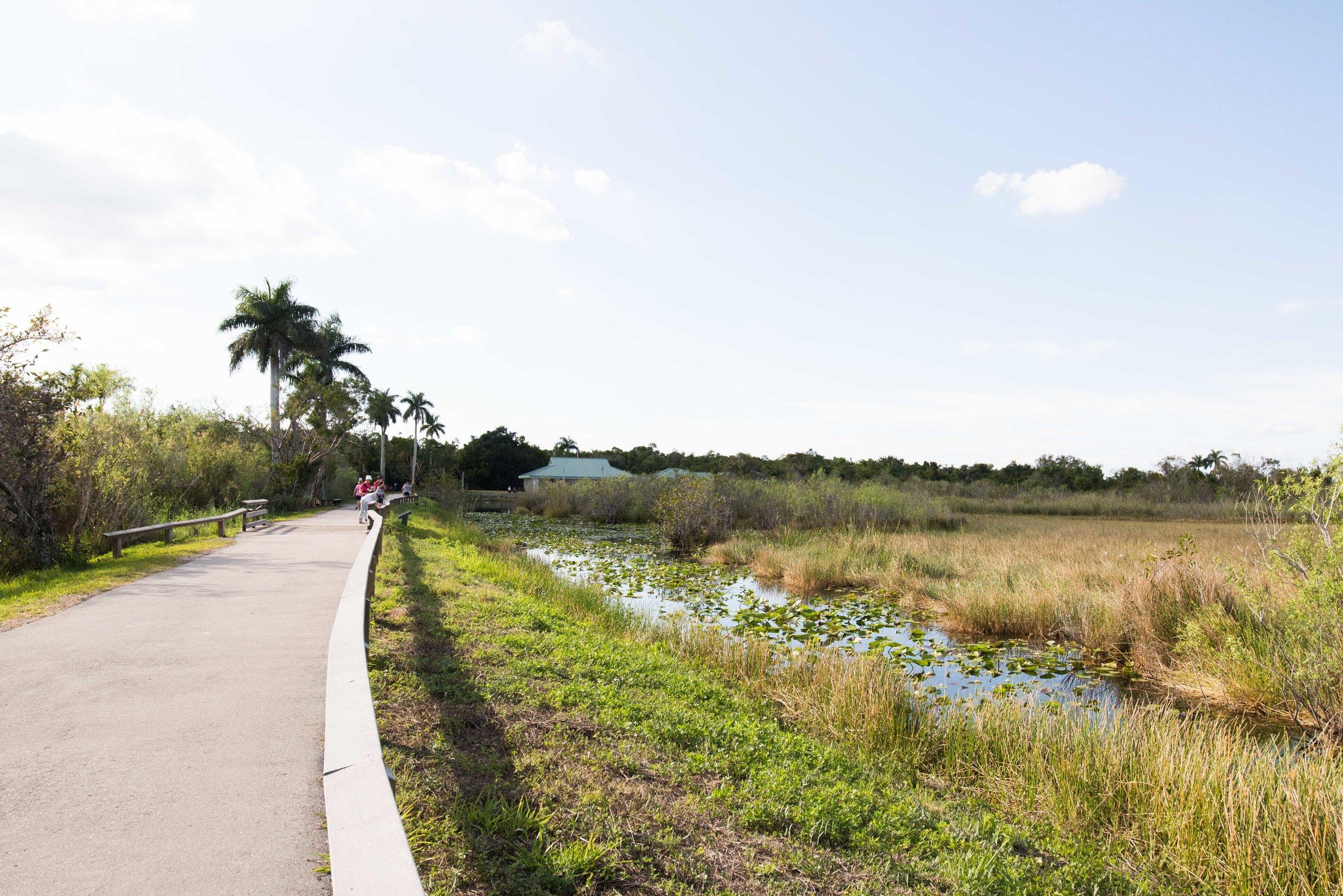 2019_Everglades-273.jpg