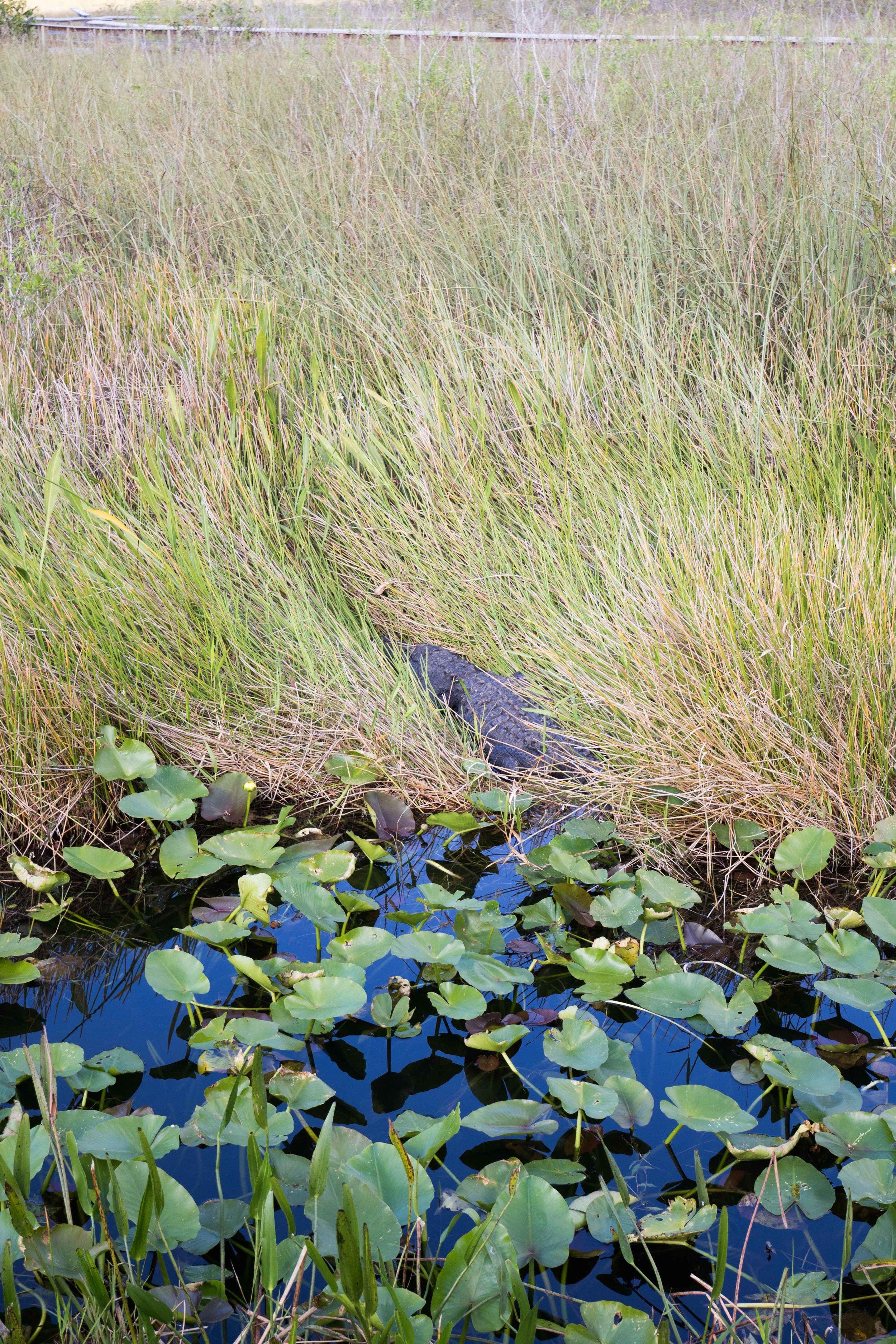 2019_Everglades-276.jpg