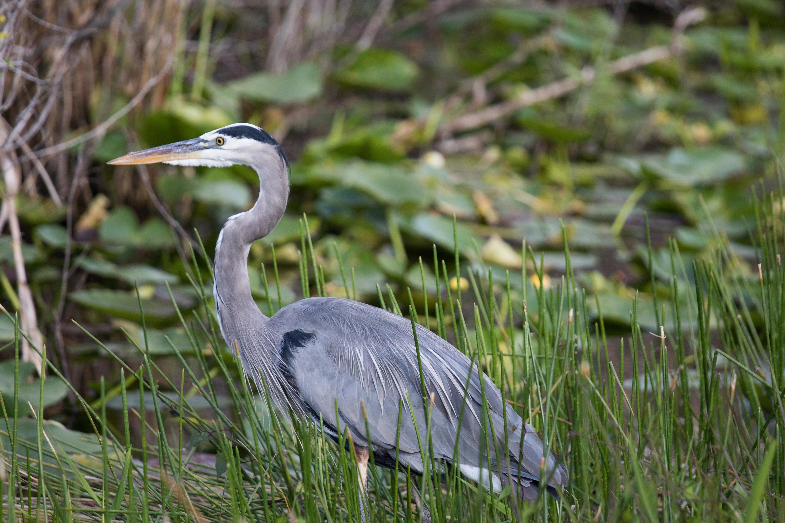 2019_Everglades-285.jpg