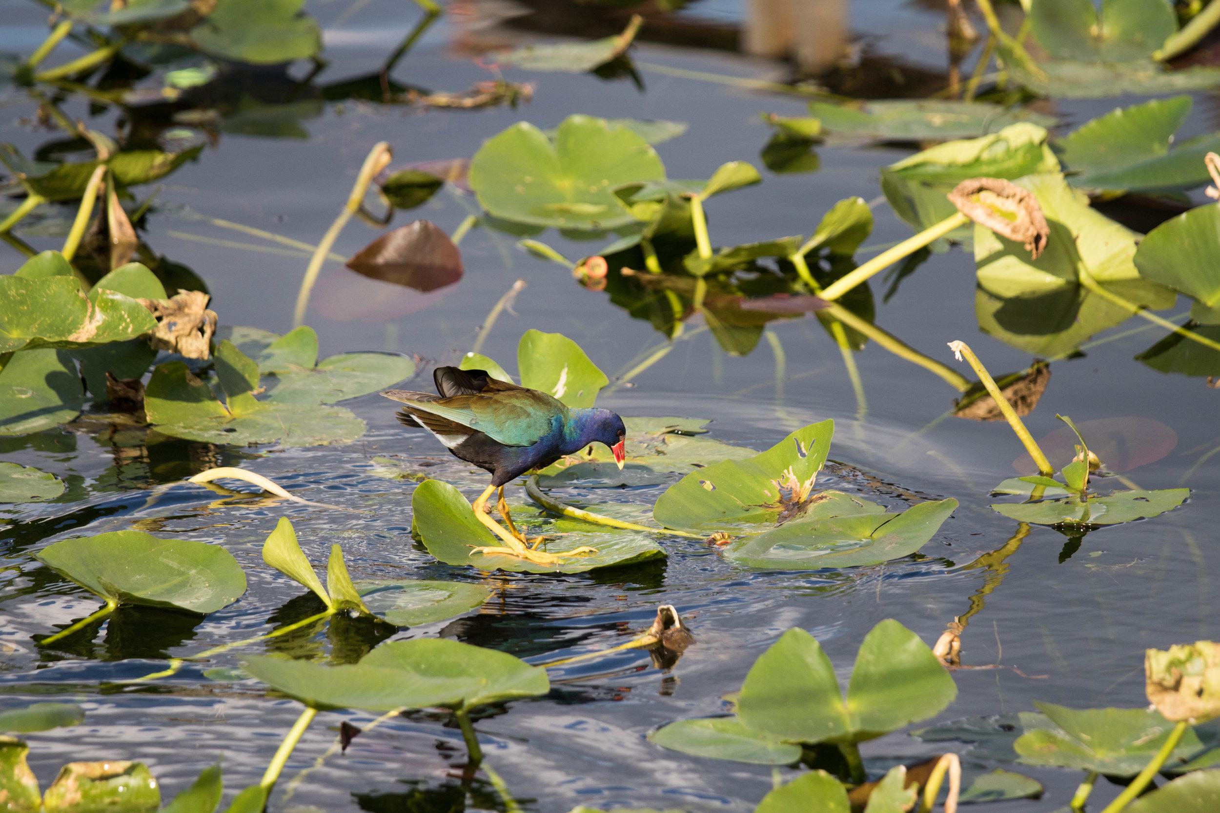 2019_Everglades-297.jpg