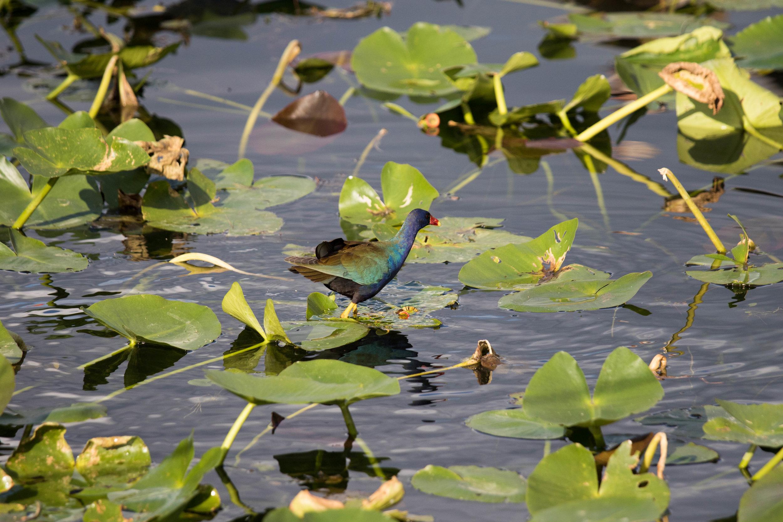 2019_Everglades-299.jpg