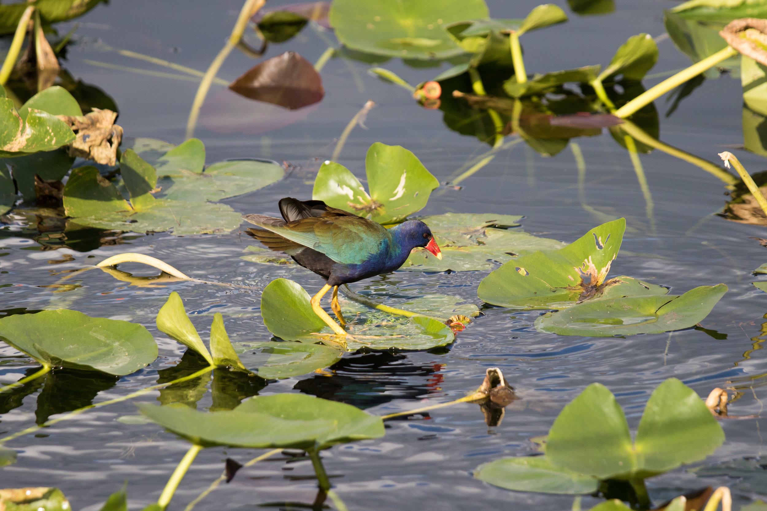 2019_Everglades-298.jpg