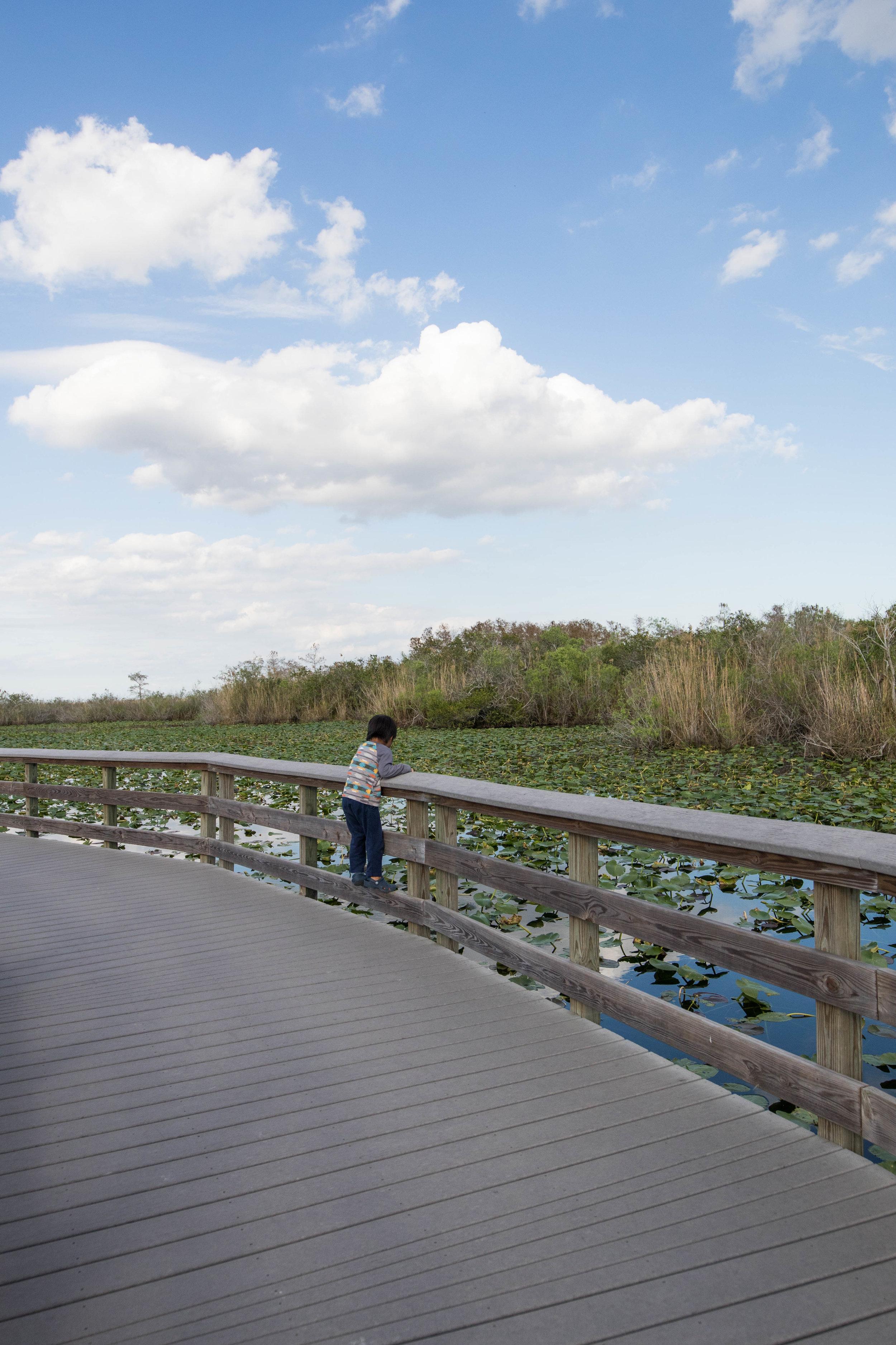 2019_Everglades-302.jpg