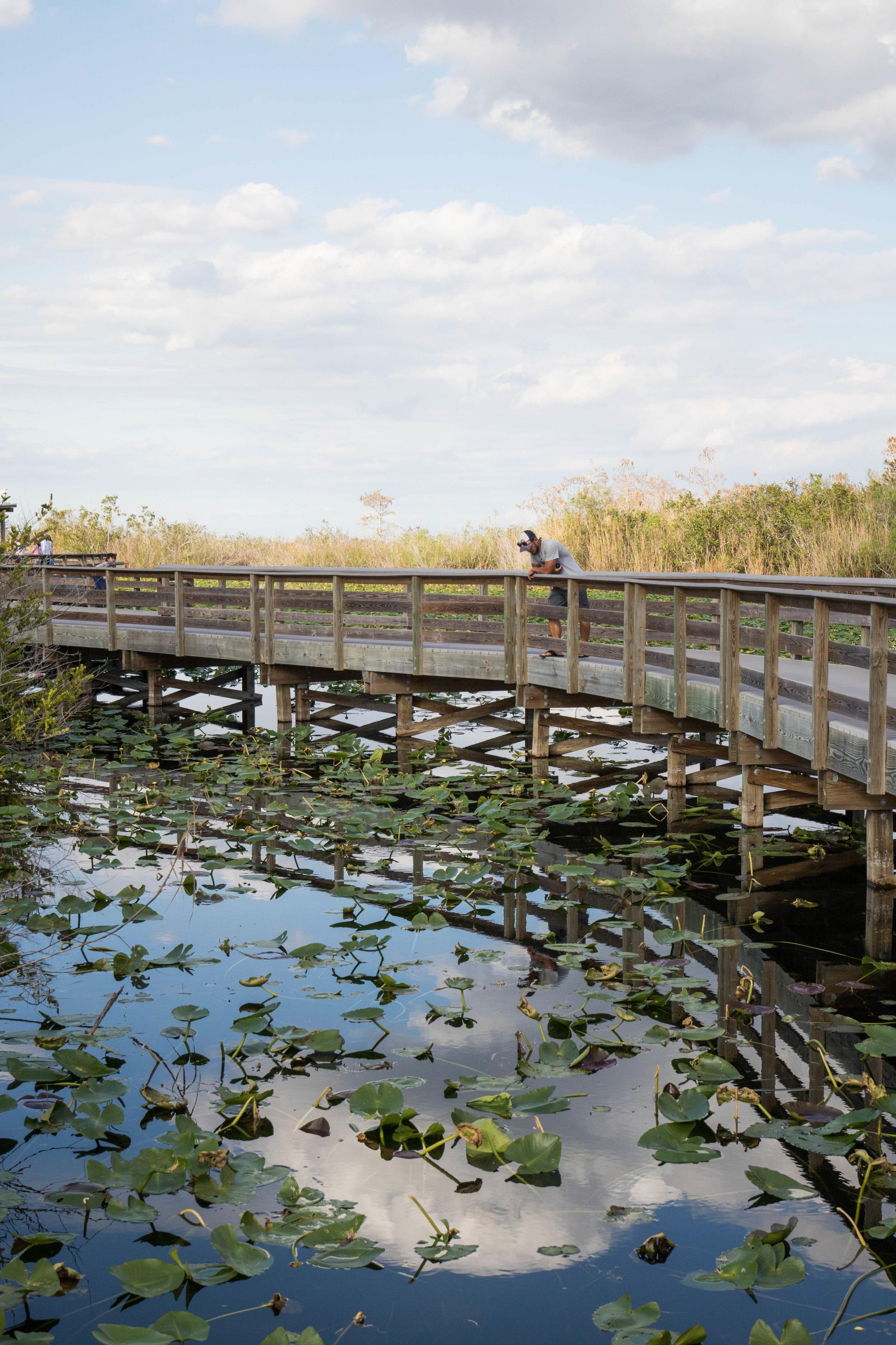 2019_Everglades-303.jpg
