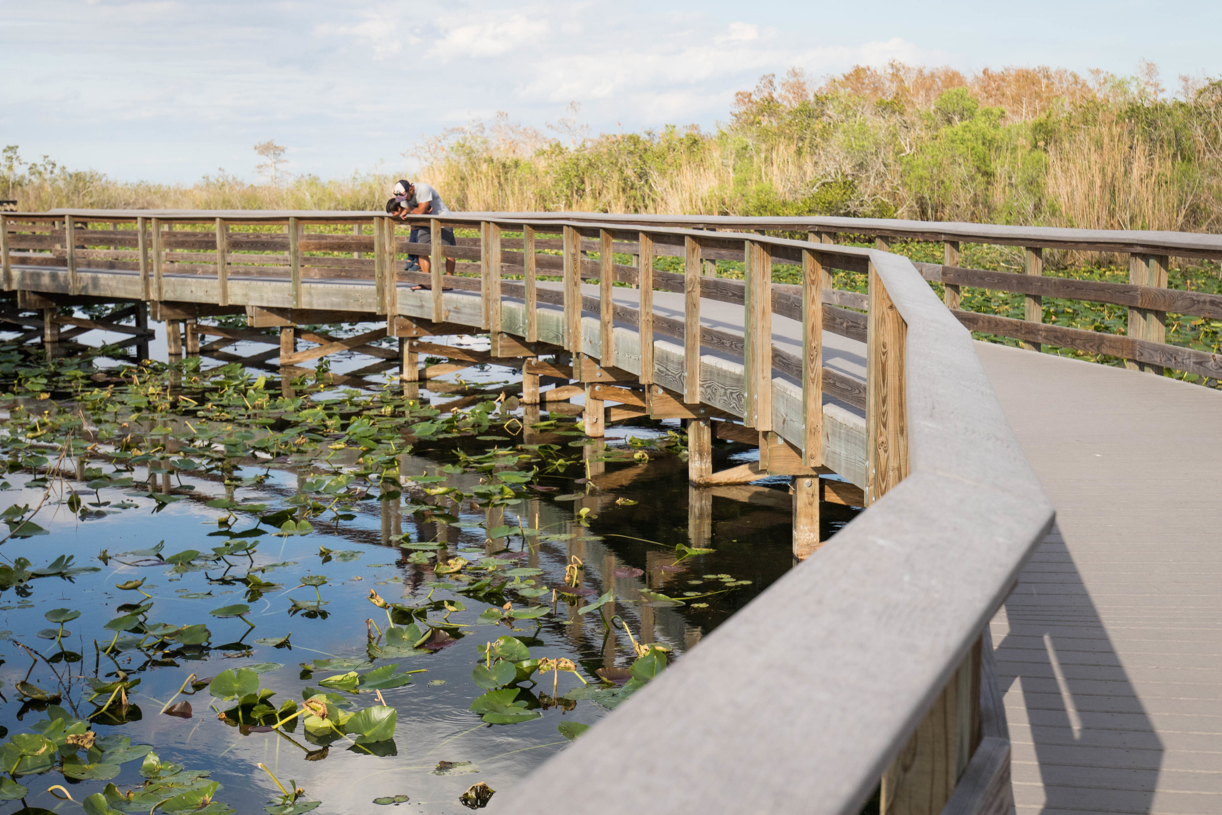 2019_Everglades-305.jpg