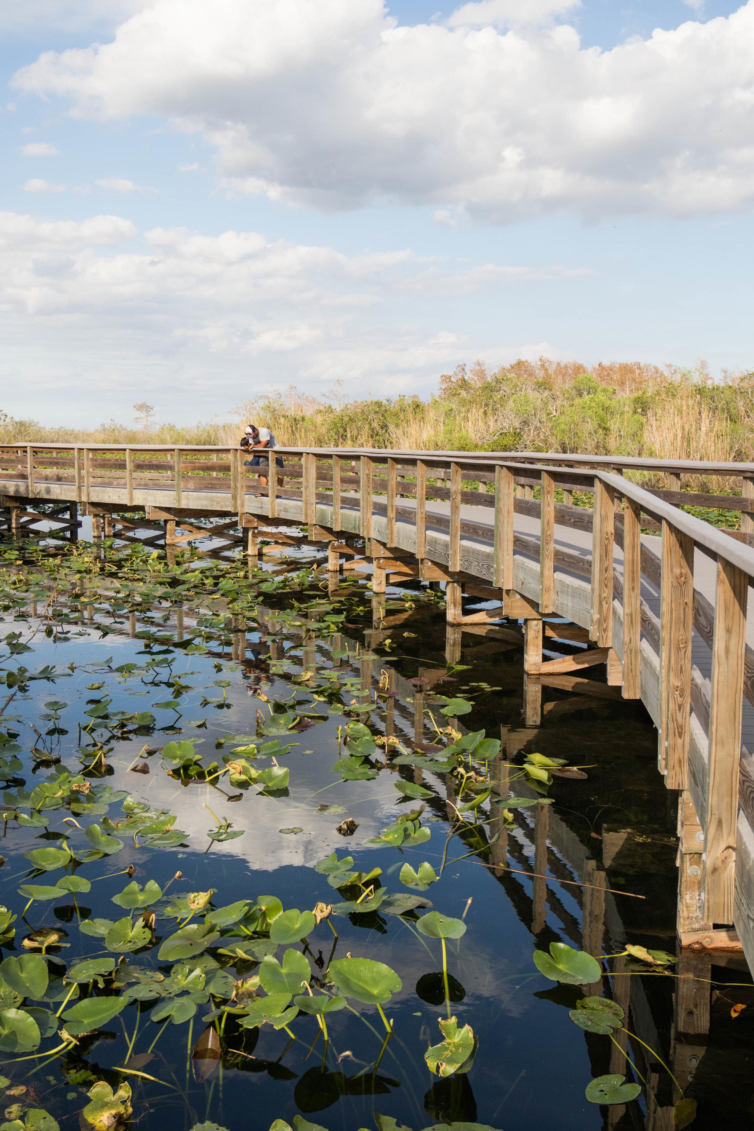 2019_Everglades-307.jpg