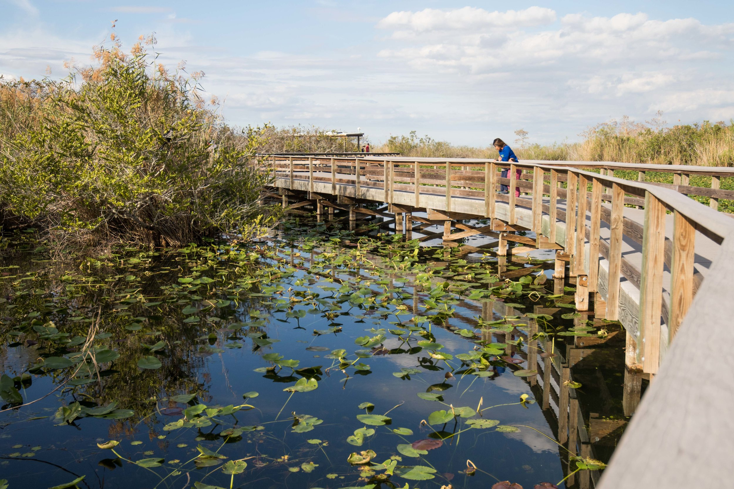 2019_Everglades-309.jpg