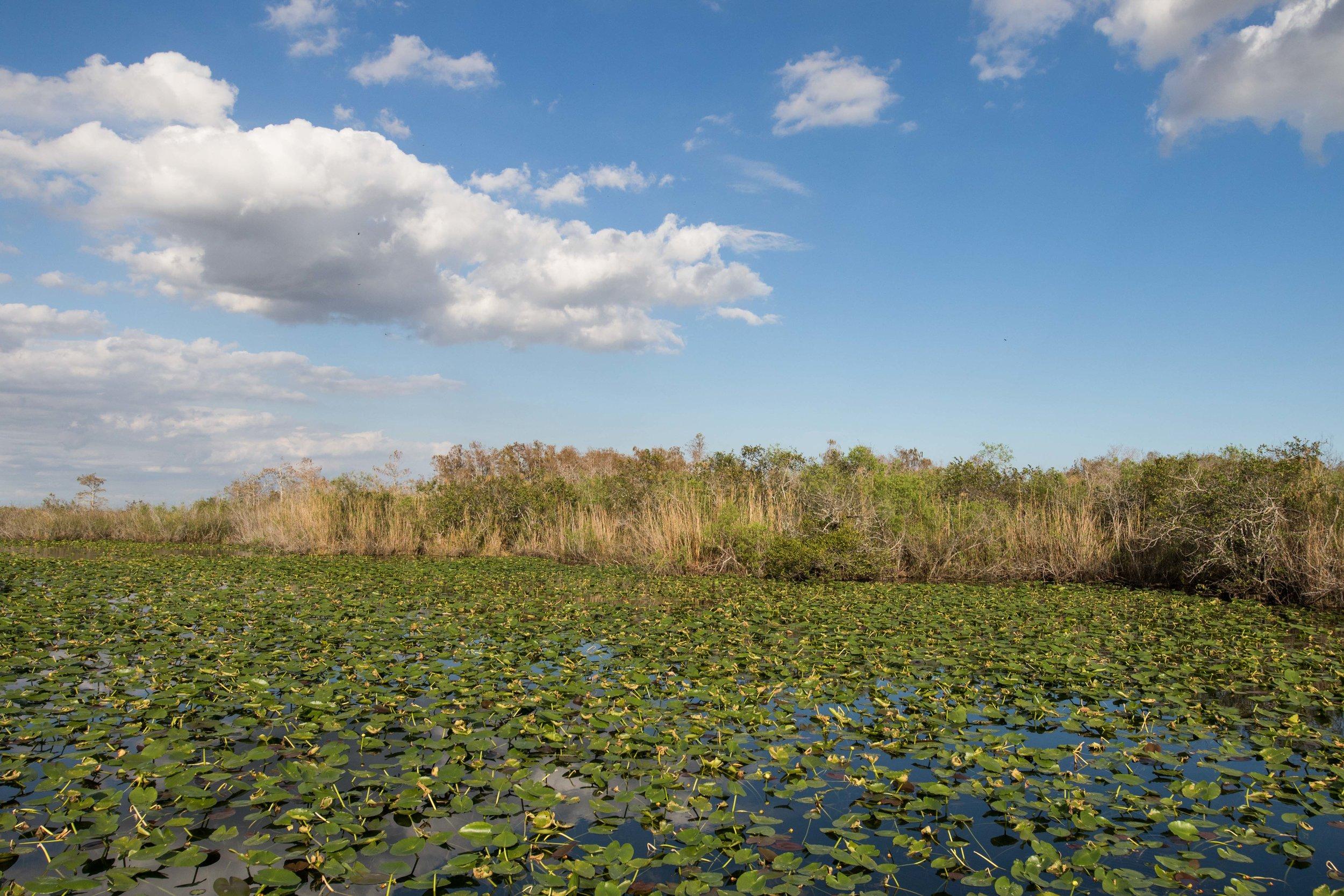 2019_Everglades-310.jpg