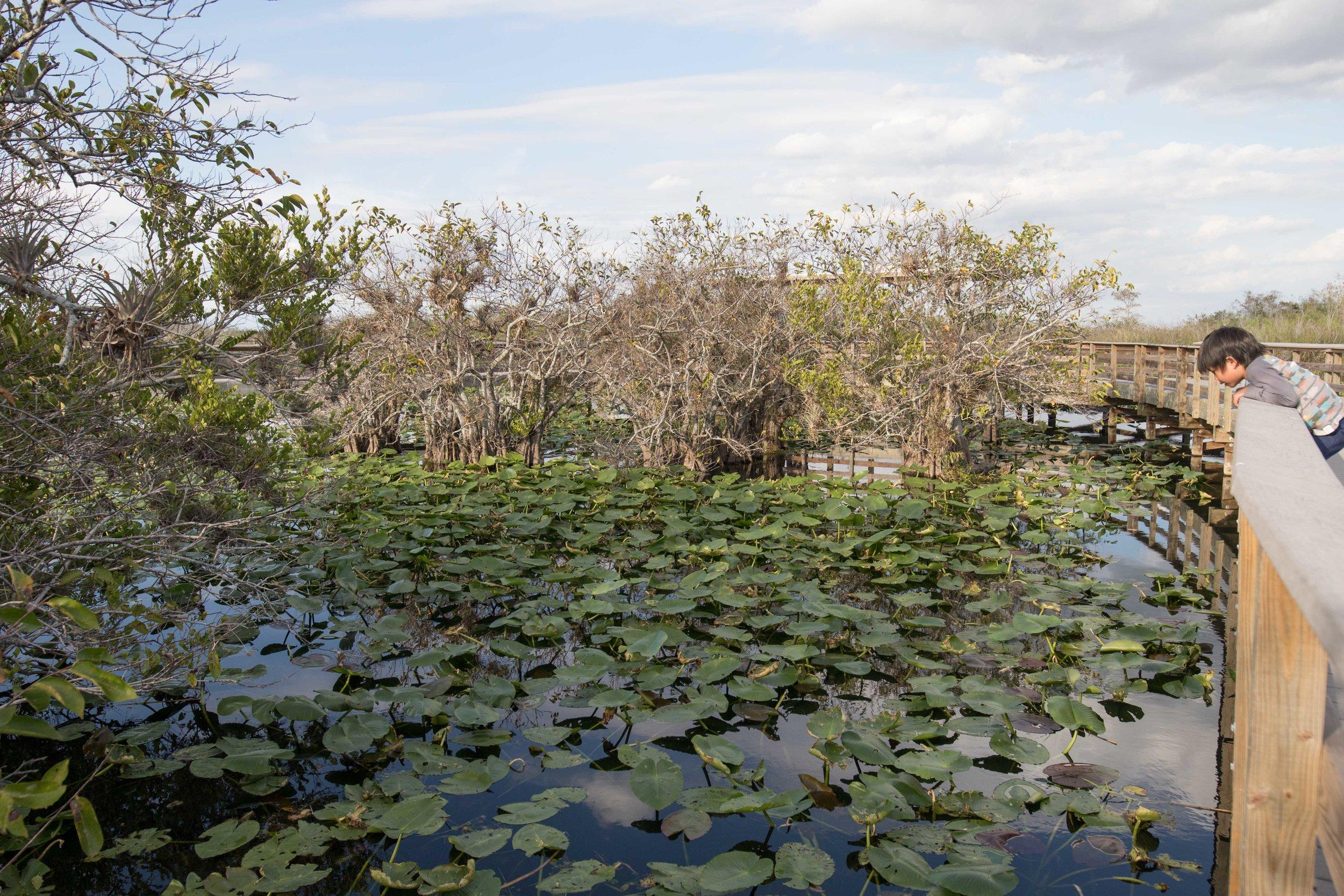 2019_Everglades-317.jpg