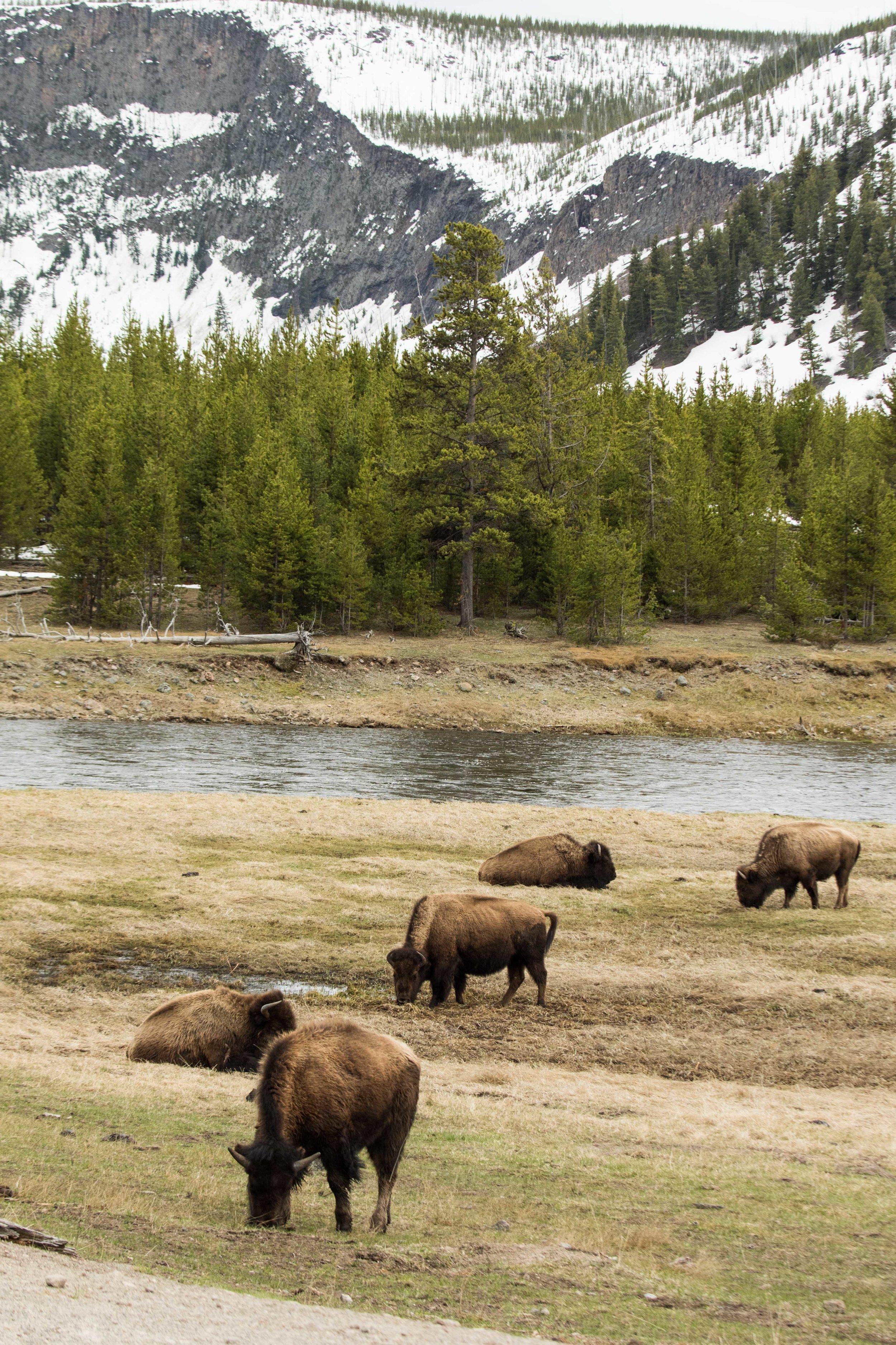 2019_Yellowstone-4.jpg