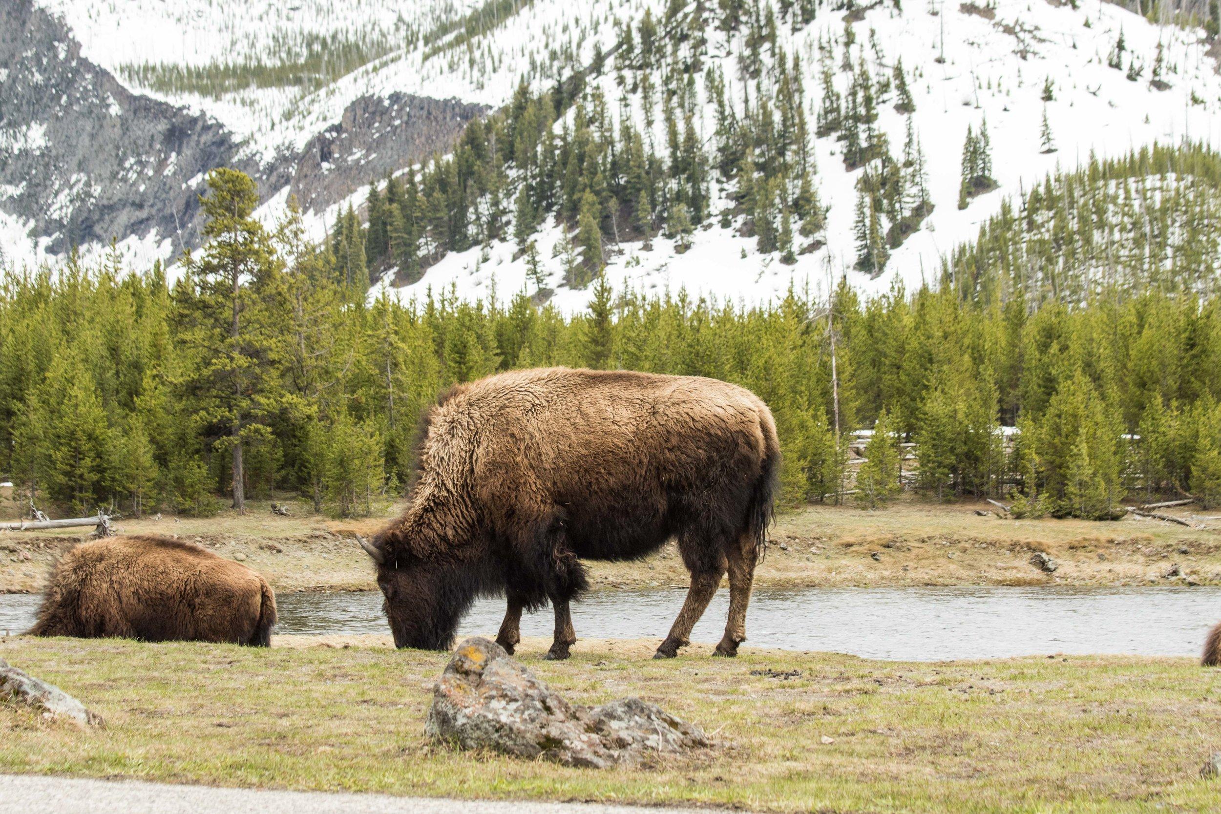 2019_Yellowstone-8.jpg