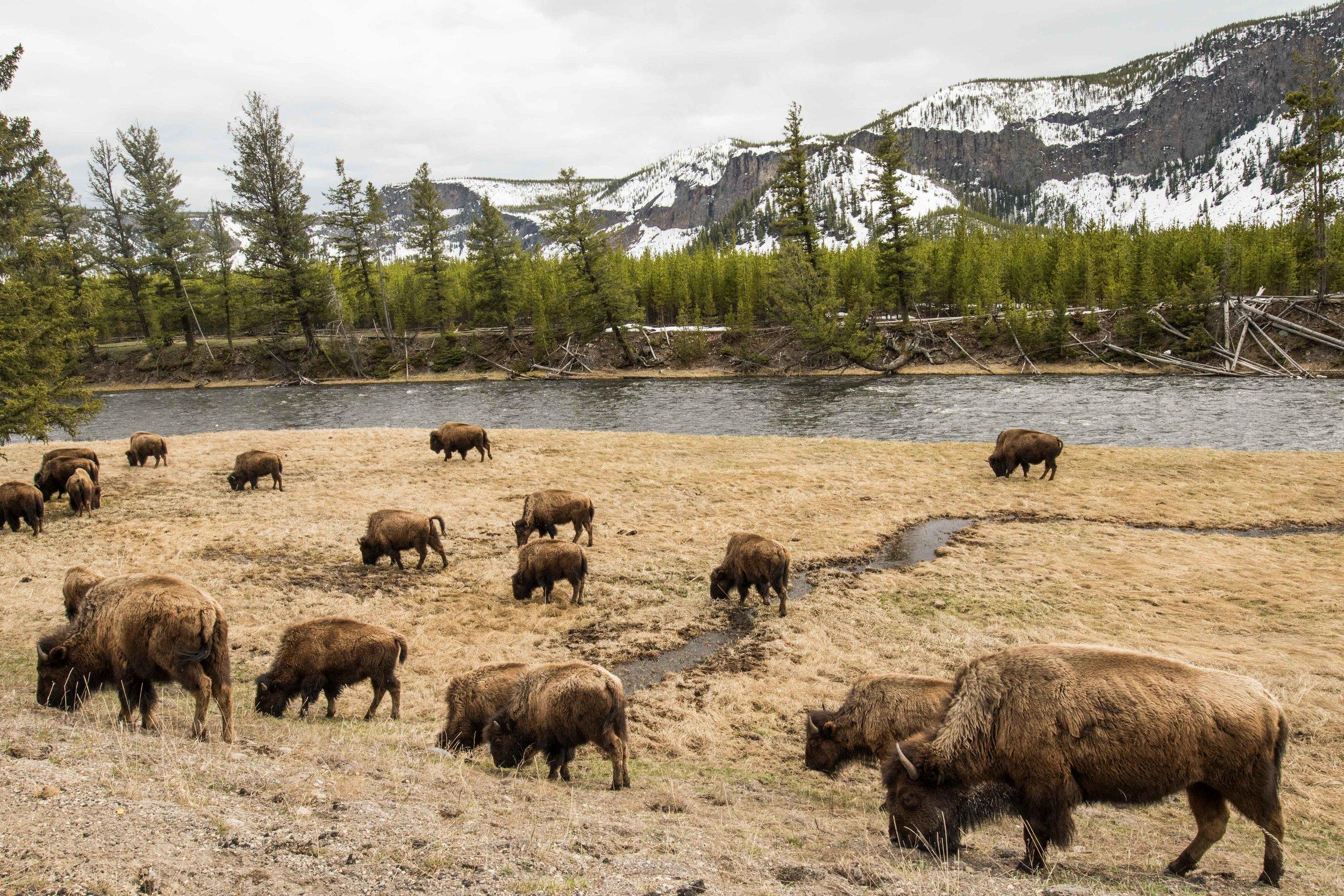 2019_Yellowstone-26.jpg