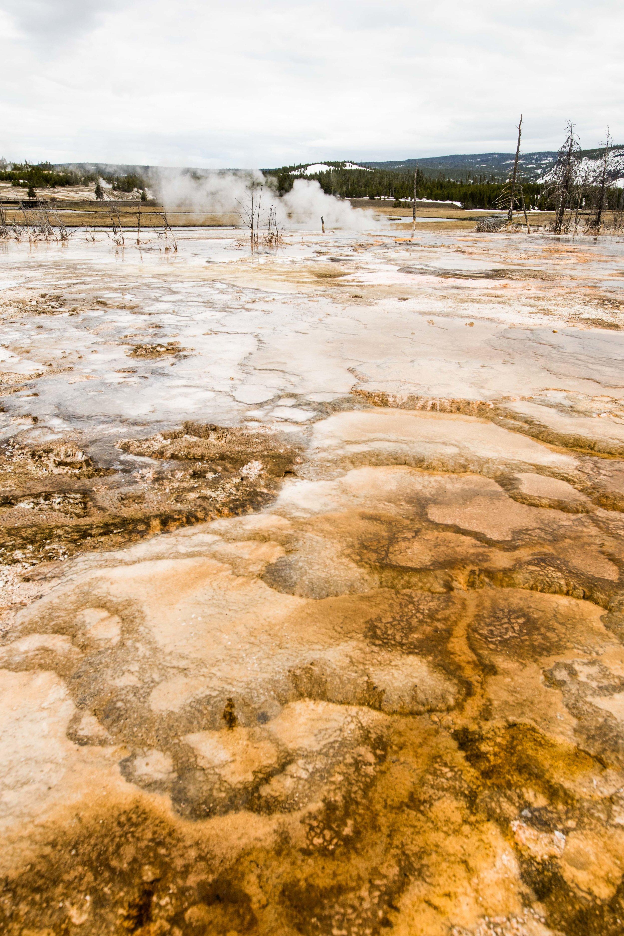 2019_Yellowstone-78.jpg