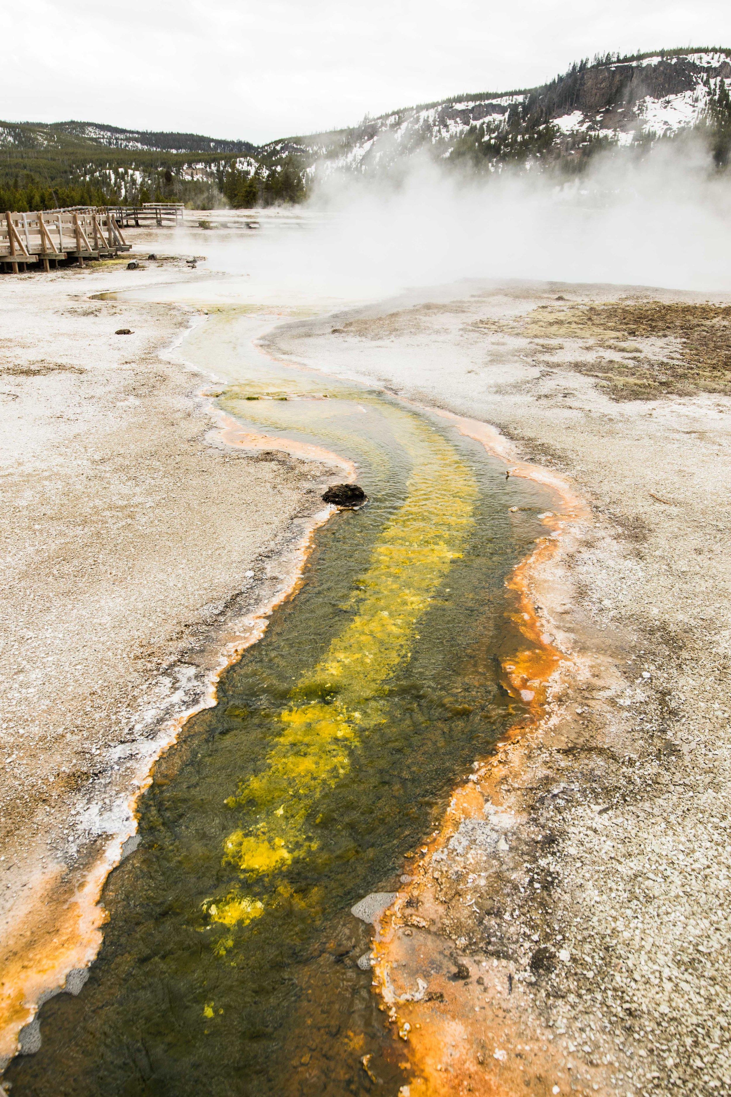 2019_Yellowstone-83.jpg