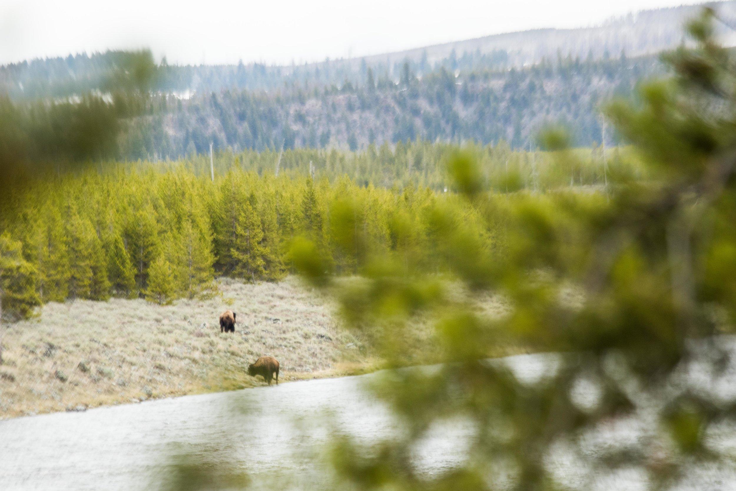 2019_Yellowstone-139.jpg
