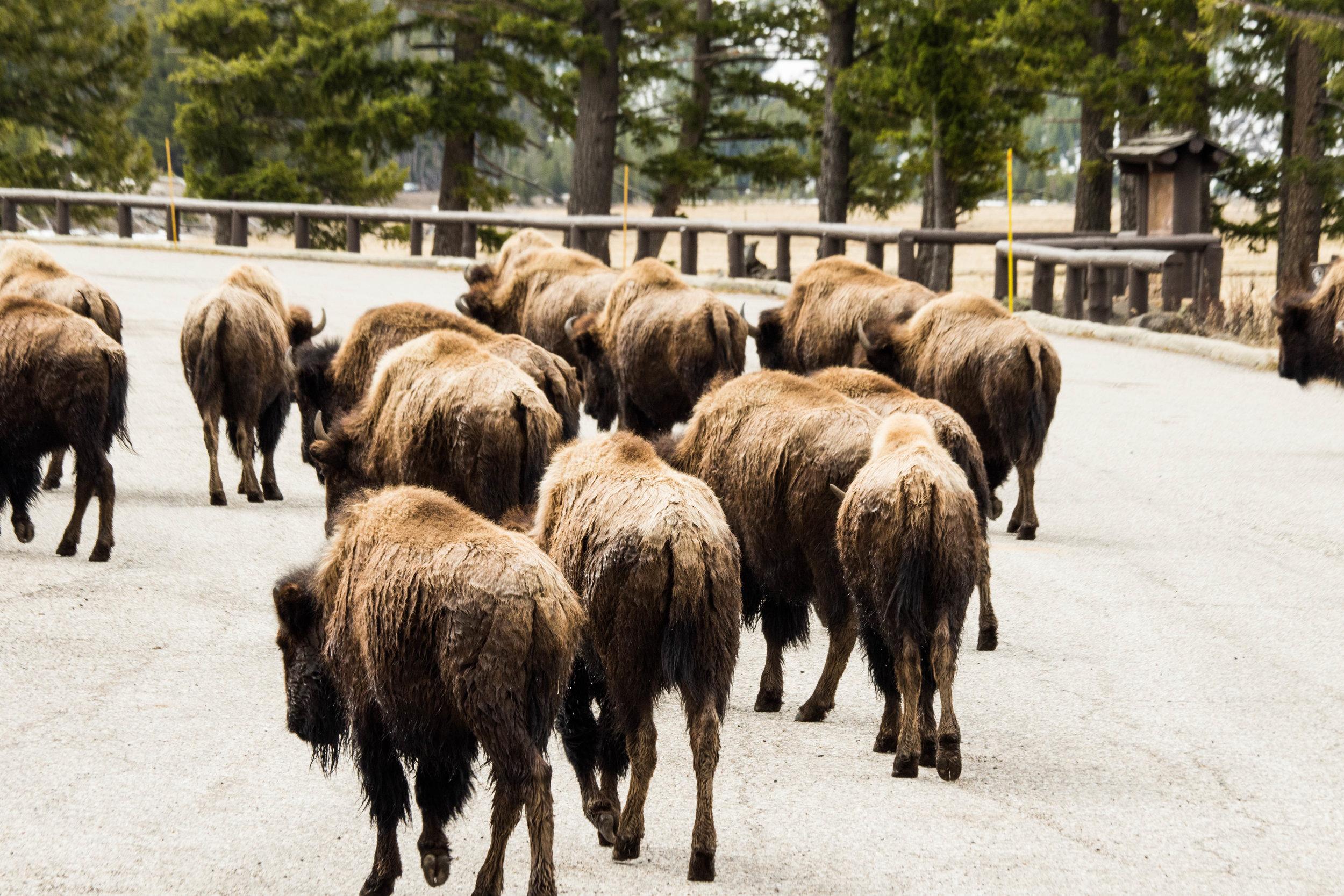 2019_Yellowstone-142.jpg