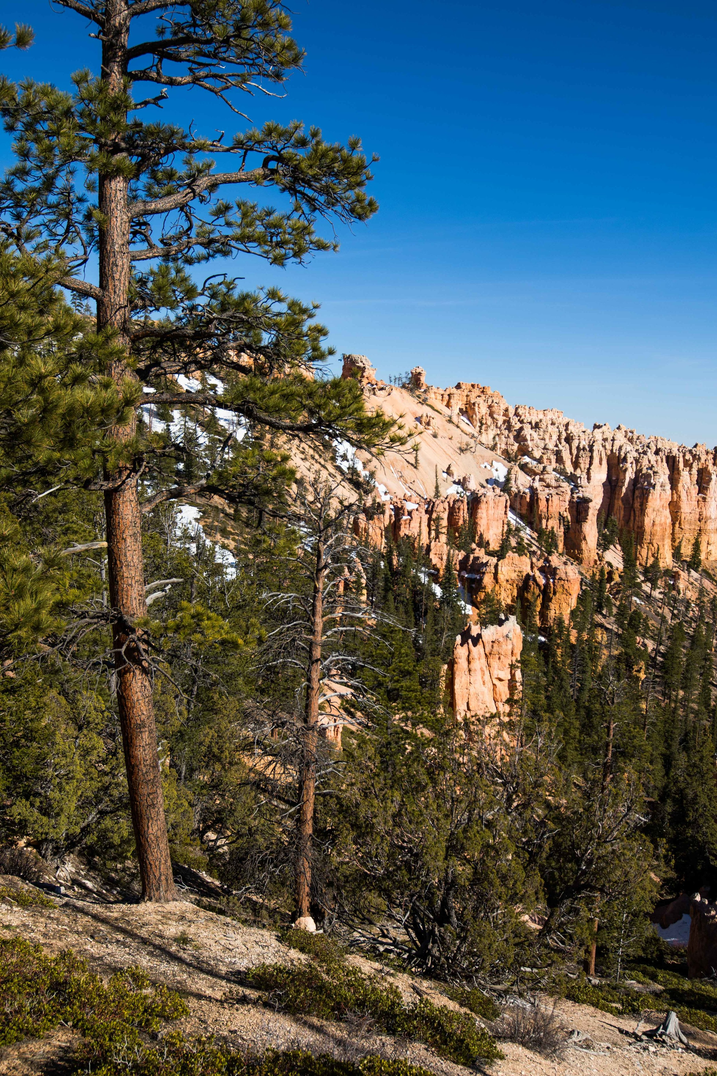 2019_Bryce_Canyon_a-8.jpg