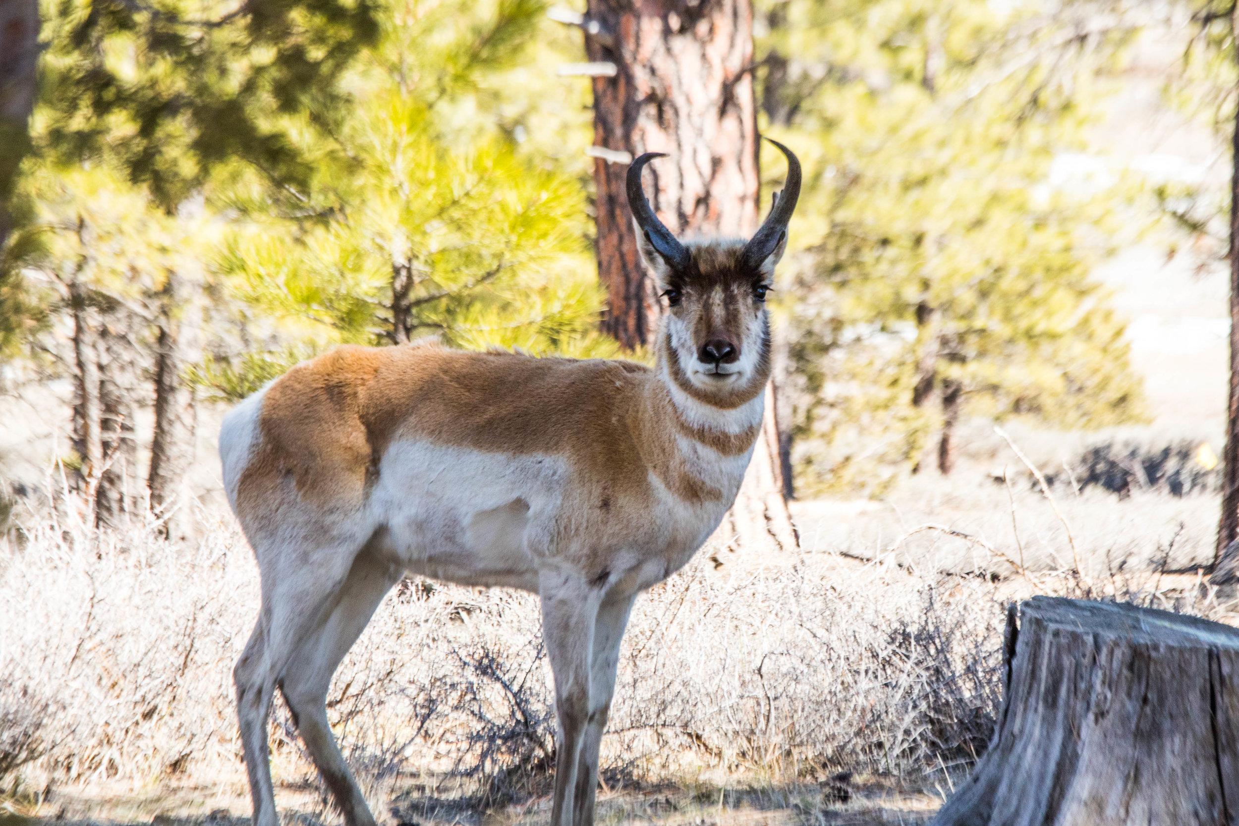 2019_Bryce_Canyon-230.jpg